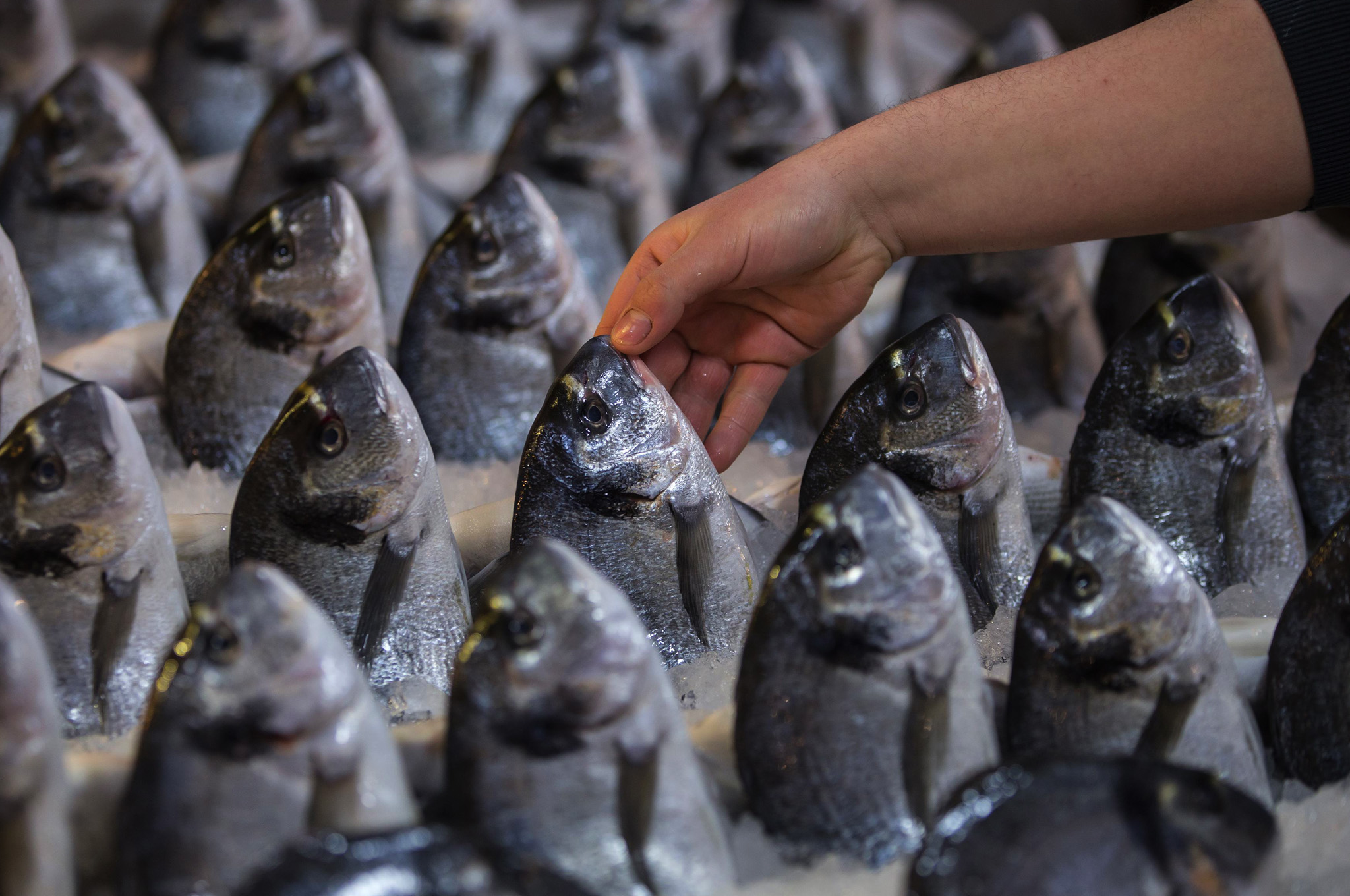 A man offers his fish for sale at a central fish market in Athens.