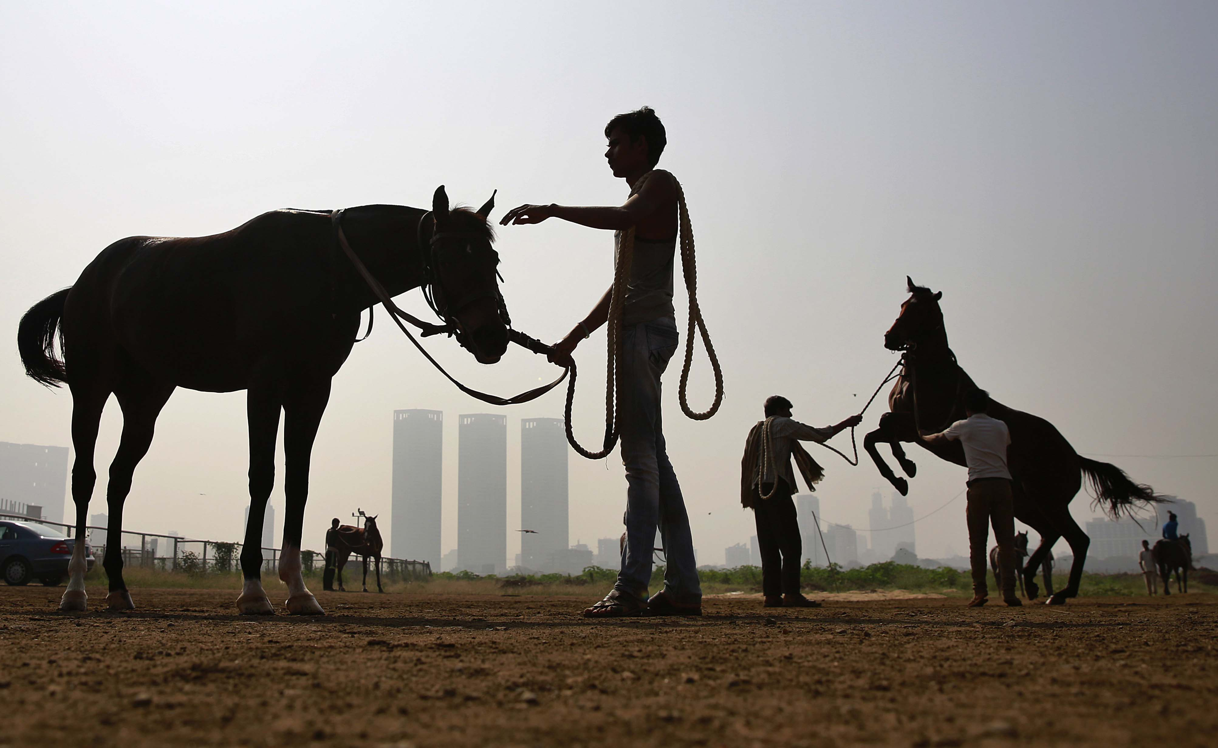 India Horse Racing
