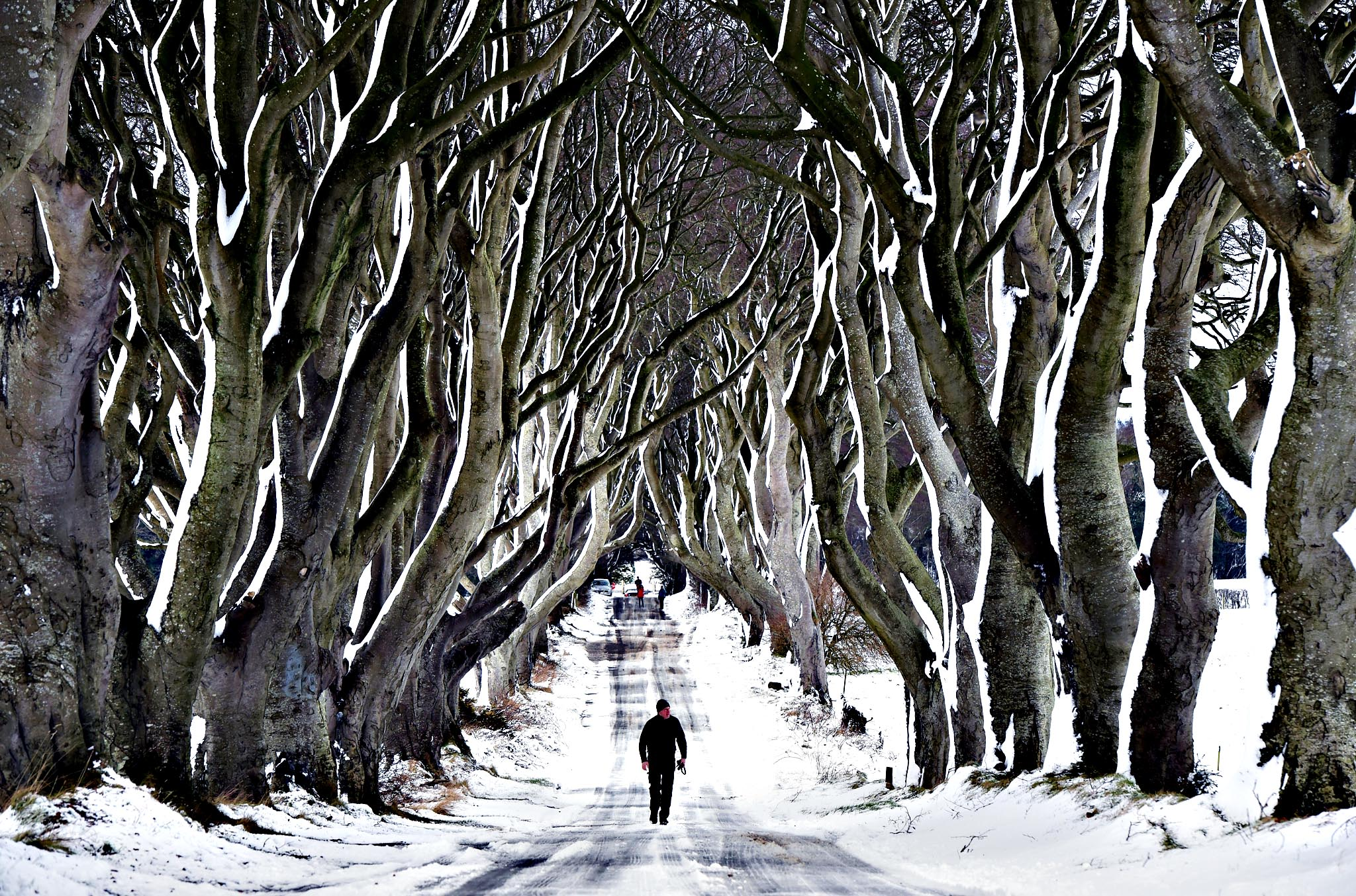 A man walks along the famous Dark Hedges avenue of trees on January 14, 2015 in Antrim, Northern Ireland. The province experienced heavy snowfall as a cold weather front hit the northern part of the United Kingdom today causing major traffic disruption and school closures.