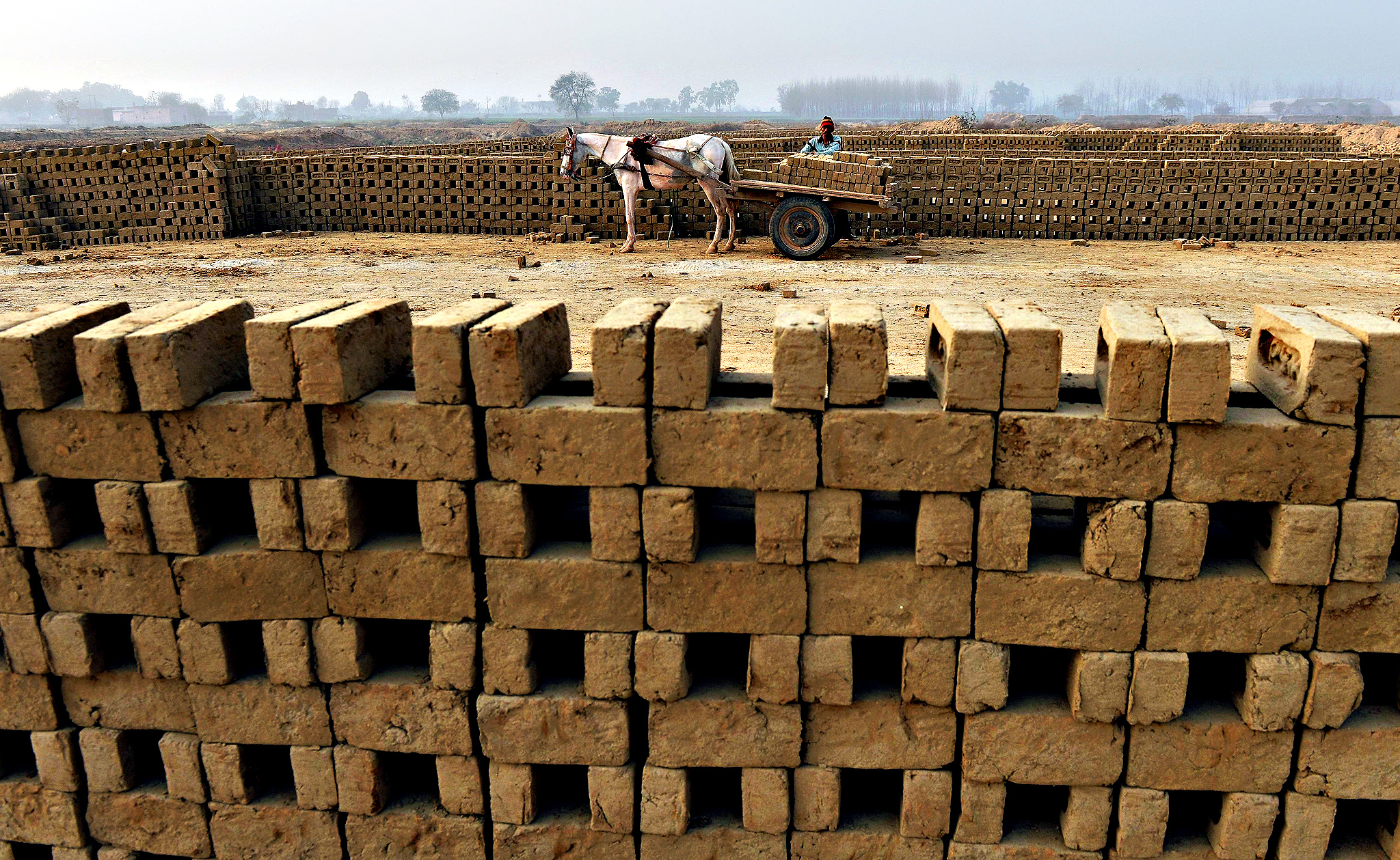 An Indian labourer loads unbaked clay bricks on a horse-drawn cart to deliver them to a brick kiln in Sahibabad on the outskirts of New Delhi on Friday
