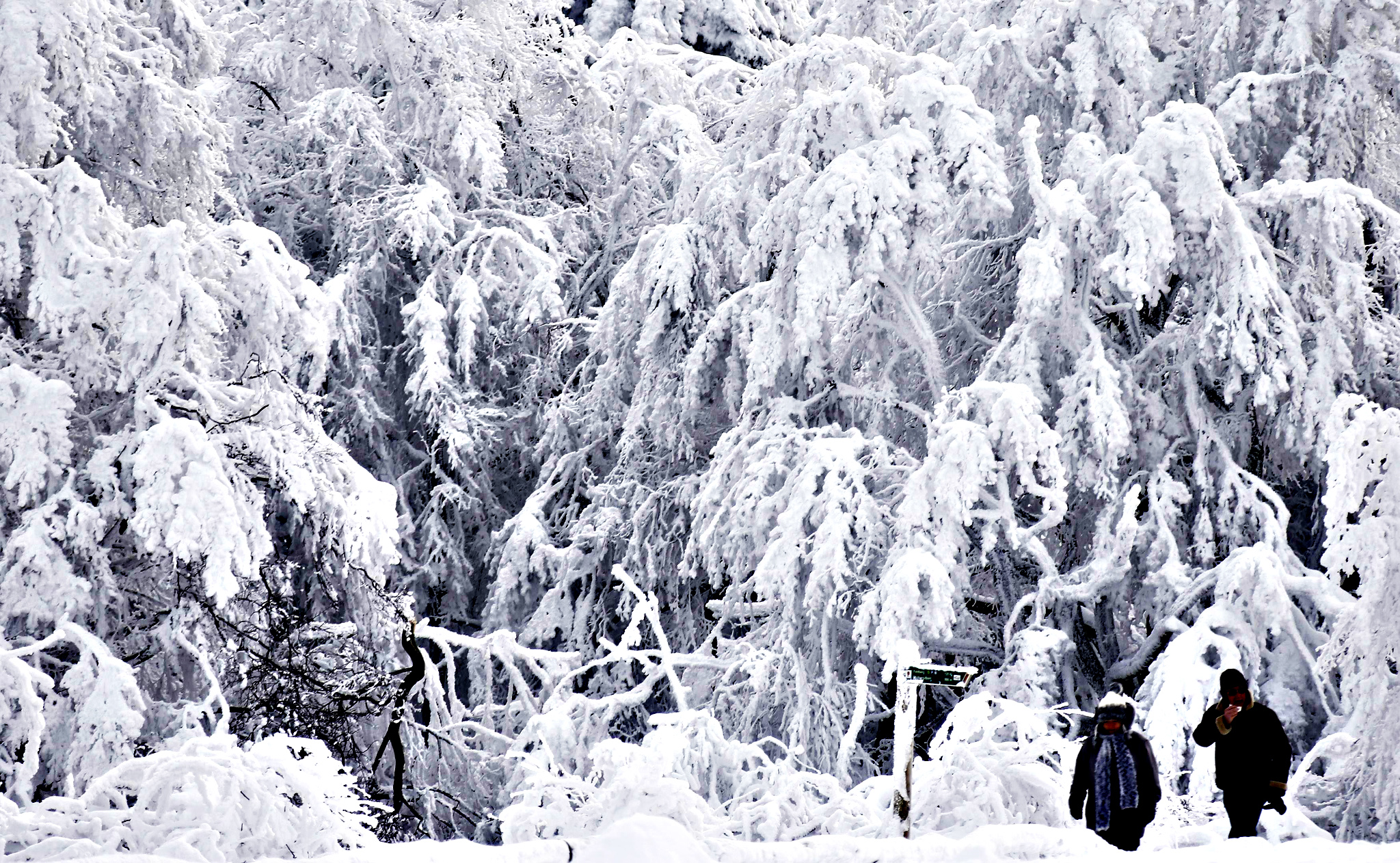 People walk past snow and ice covered trees on top of the Feldberg mountain during a winter day, around 20km outside of Frankfurt, February 5, 2015.