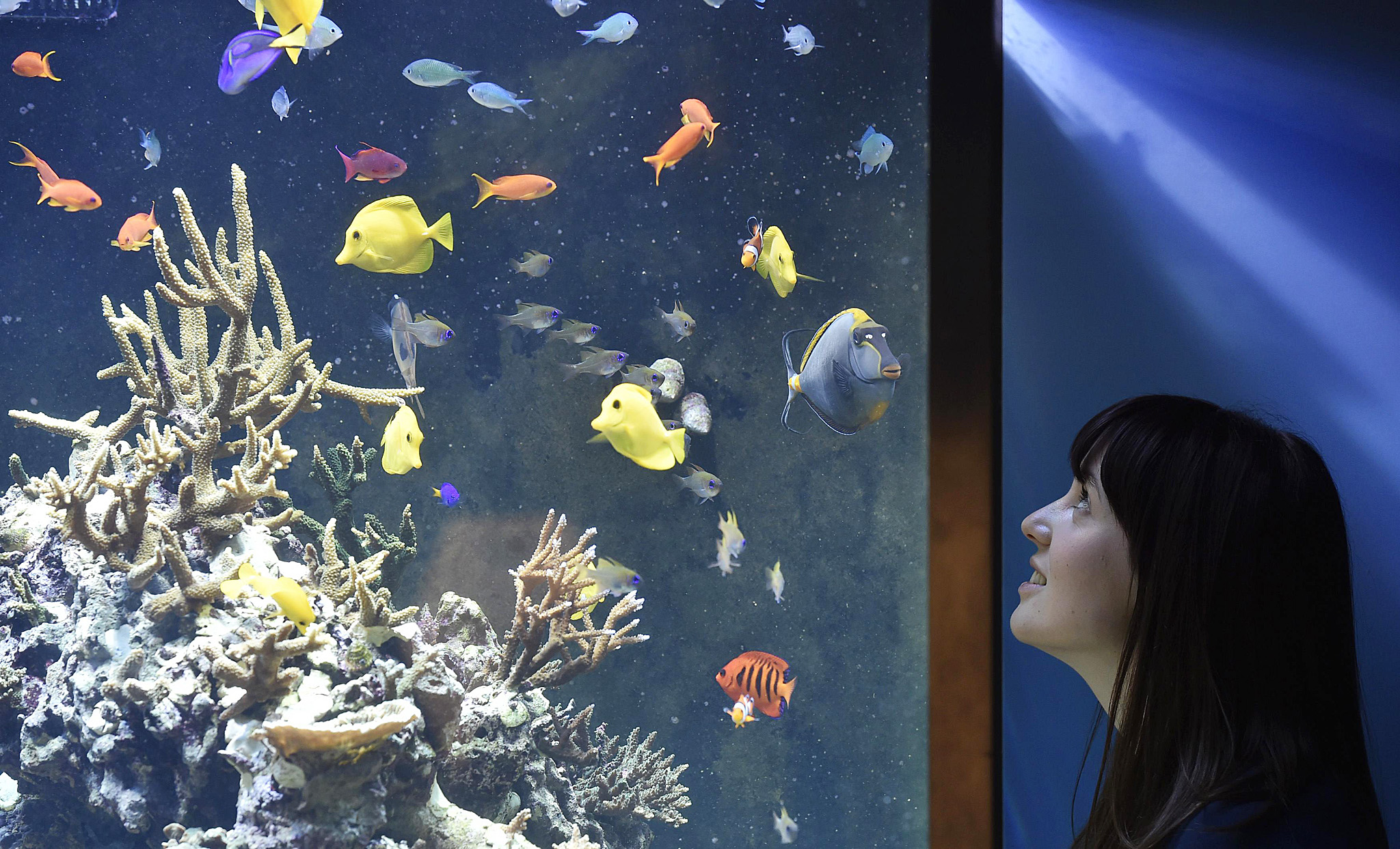 New exhibition, 'Coral Reefs: Secret Cities of the Sea' opens at Natural History Museum in London...Museum employee Vicky views fish and coral in an aquarium at the Natural History Museum in west London March 25, 2015. It forms part of a new exhibition, 'Coral Reefs: Secret Cities of the Sea', featuring a panoramic virtual dive and over 250 specimens from the Museum's coral, fish and marine invertebrate  collection, which opens on March 27.  REUTERS/Toby Melville