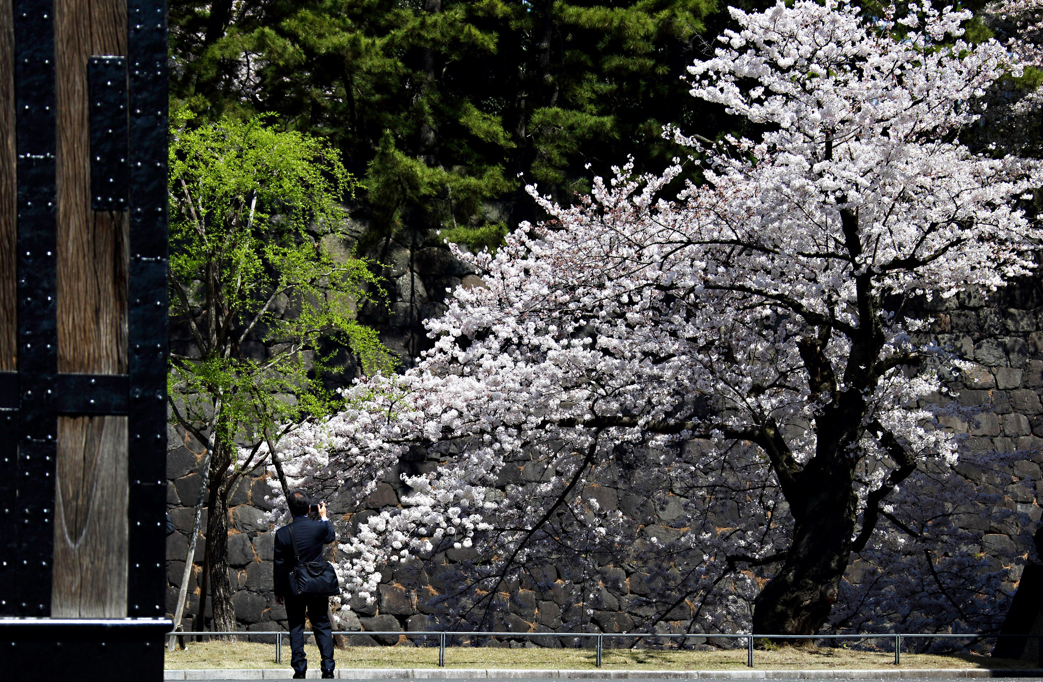 A man takes a photograph of a cherry tree in blossom in Tokyo, Japan, on Tuesday, March 31, 2015. Japan's emergence from recession was weaker than first estimated as companies unexpectedly cut investment and drew down their inventories, offsetting a pickup in consumer spending. Photographer: Tomohiro Ohsumi/Bloomberg