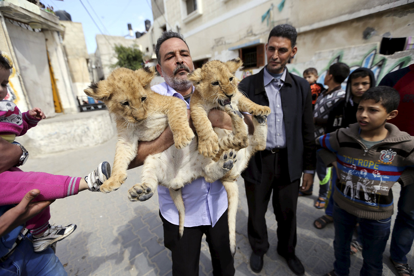 Palestinian refugee Al-Jamal sits with his African two lion cubs outside his house at Al-Shabora refugee camp in Rafah in the southern Gaza Strip