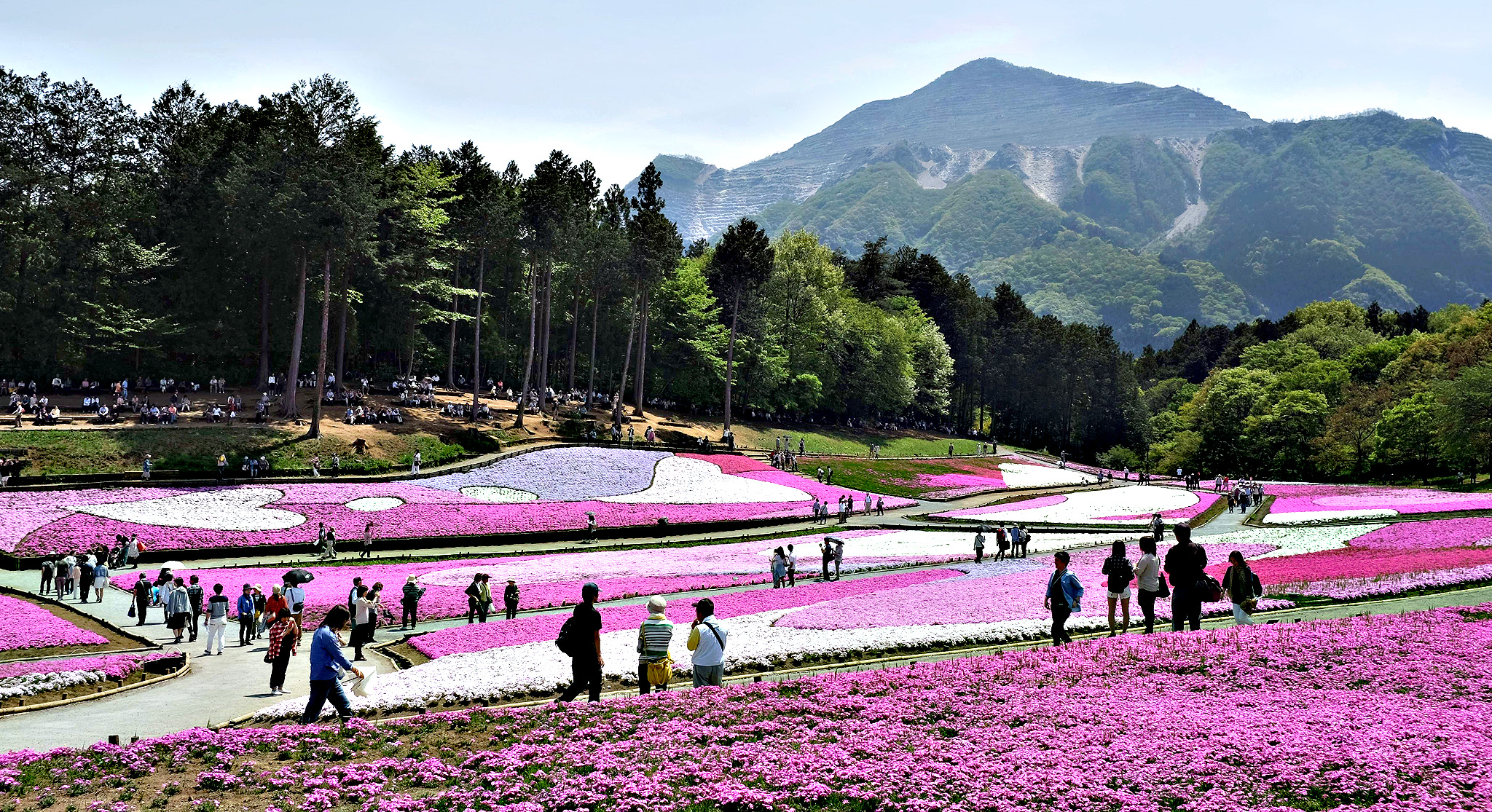 "Visitors stroll in the Hitsujiyama Park covered with moss phlox in full bloom in Chichibu, suburban Tokyo on Tuesday. Blossoming moss phlox are expected to attract many visitors until the upcoming Japanese ""Golden Week"" holiday season in late April and early May"