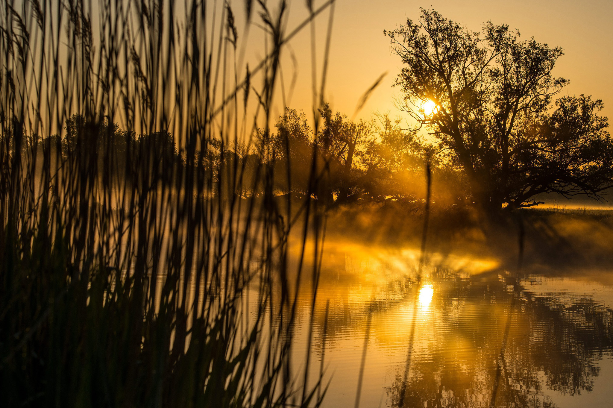 Feature Sunrise Lights...epa04761495 Sunrise lights up by the foggy landscape in Reitwein, (Brandenburg), Germany, early morning 22 May 2015.  EPA/PATRICK PLEUL