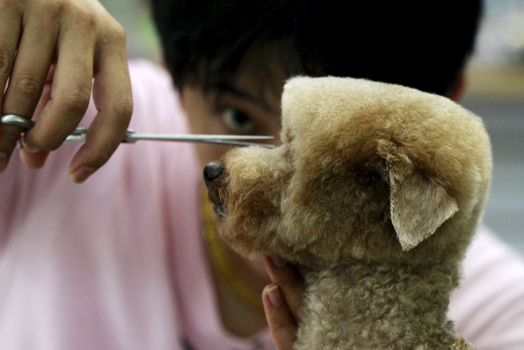 A dog is groomed at a pet shop in Taipei