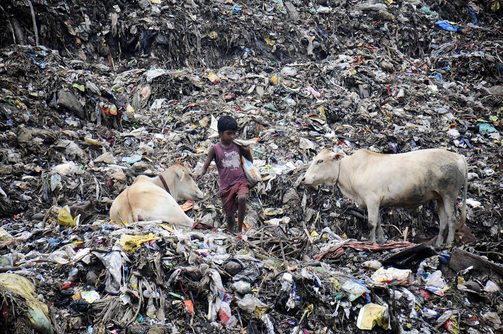 An Indian rag-picker looks for recyclable material in what is reportedly the largest rubbish tip in the state of Assam on the eve of World Environment Day in the Boragoan area of Guwahati on June 4, 2015.  World Environment Day is marked anually on June 5.
