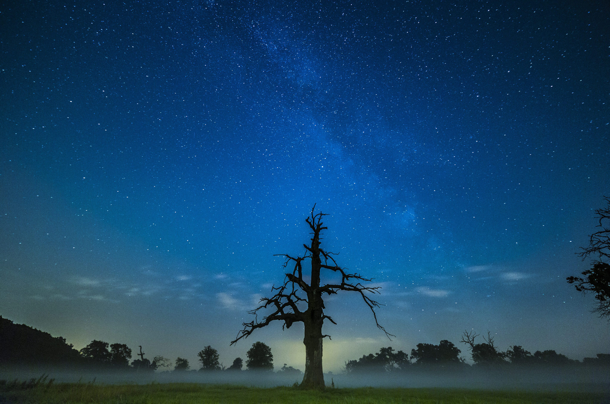 Milky Way seen in Poland...epa04849997 A picture made available on 17 July 2015 shows the bright line of the Milky Way above the old oaks at the Rogalin landscape Park in Rogalin village, near Poznan, on the night of 16 July 2015.  EPA/LUKASZ OGRODOWCZYK POLAND OUT