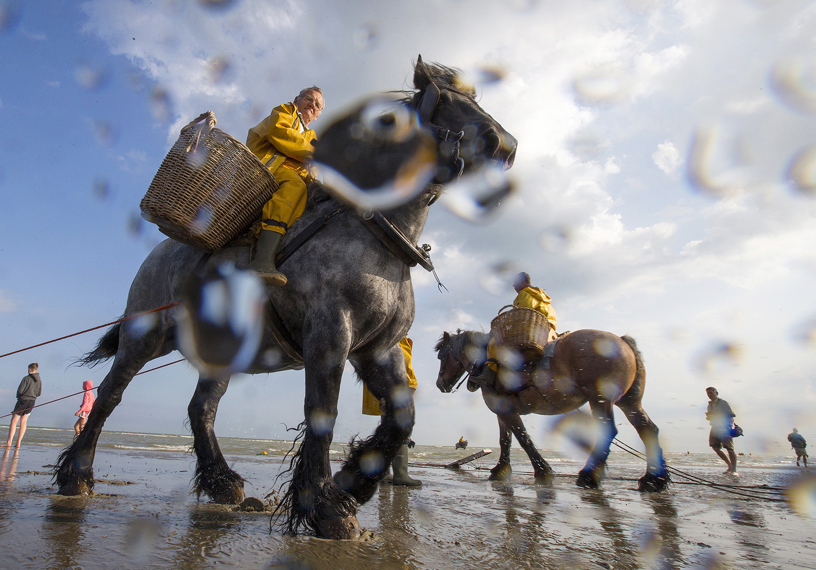 Belgian shrimp fishermen ride carthorses to haul nets out in the sea to catch shrimps during low tide at the coastal town of Oostduinkerke