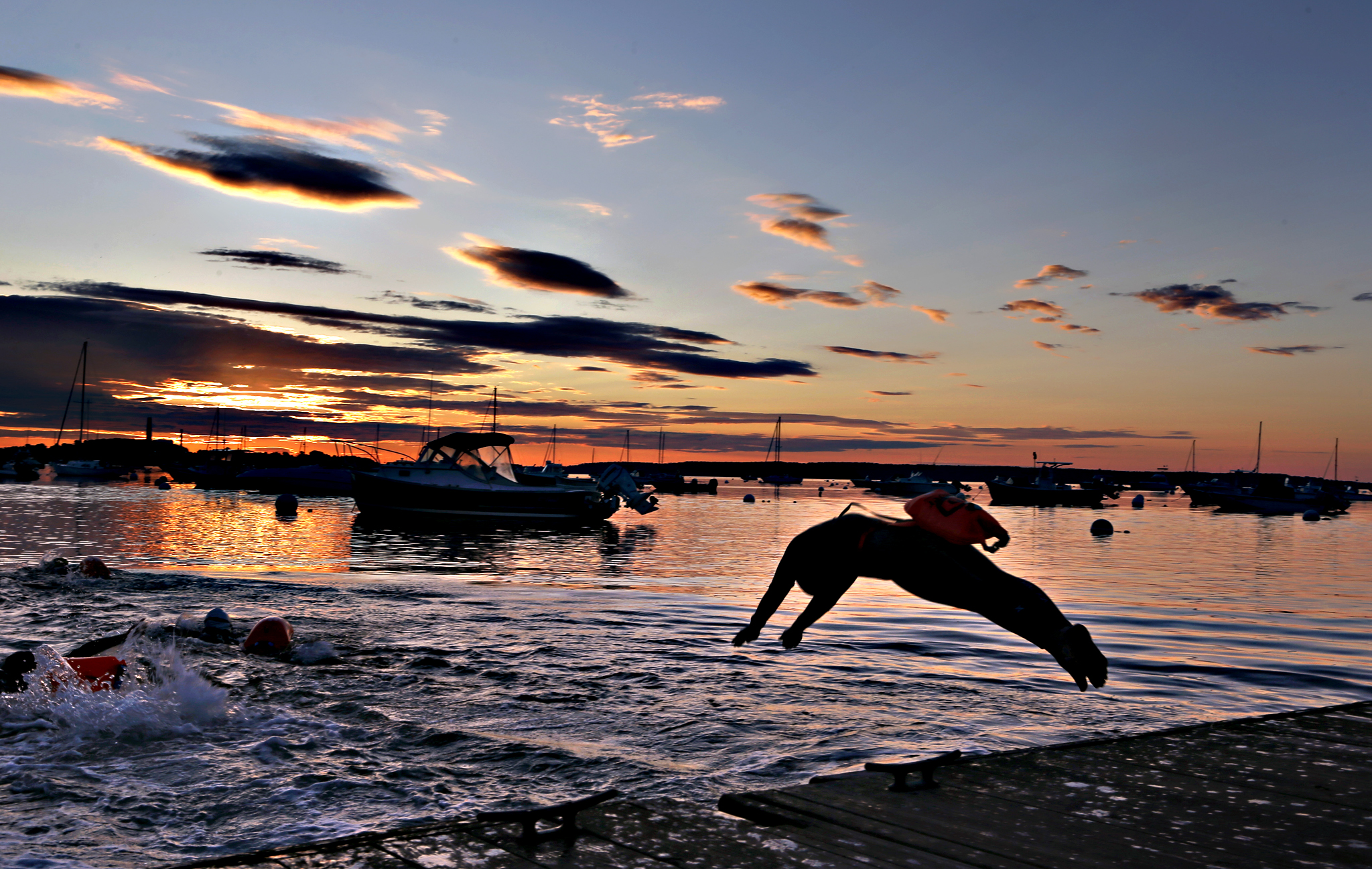 A long-distance swimmer dives into the Atlantic Ocean at dawn, Friday, July 24, 2015, in Falmouth, Maine. The woman is part of a group that regularly starts their day with a 2-mile swim. Many of the swimmers keep a float tethered to their bodies for safety