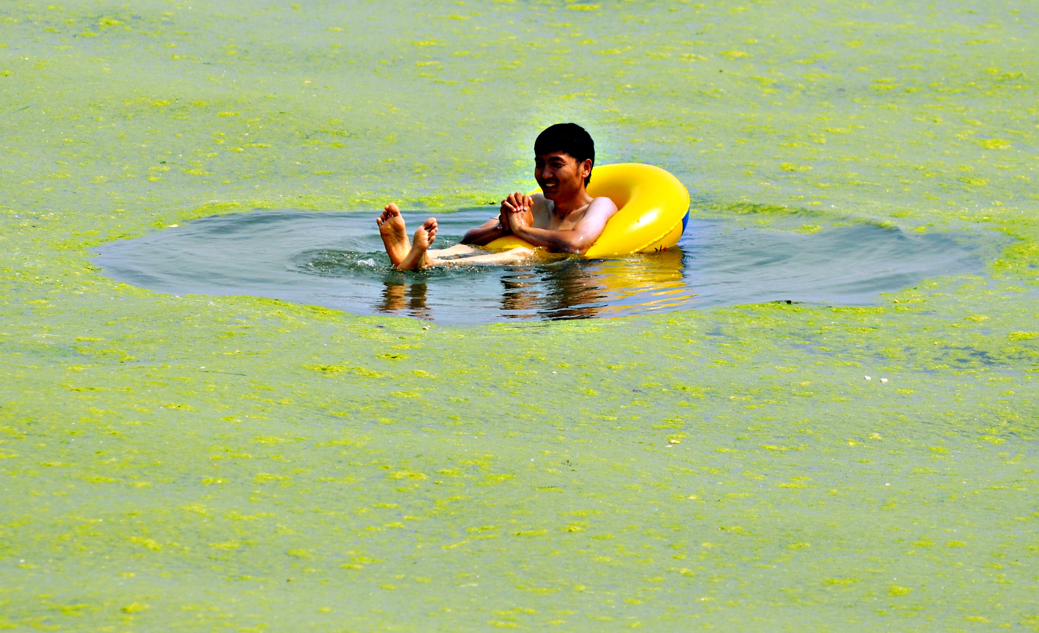 A man floating in the waters filled with algae at a beach in Qingdao, in eastern China's Shandong province. The algal phenomenon, an annual occurrence in Qingdao, is usually caused by an abundance of nutrients in the water, especially phosphorus, although the triggers for the enormous blooms which began to appear in the Yellow Sea in 2007 remain uncertain