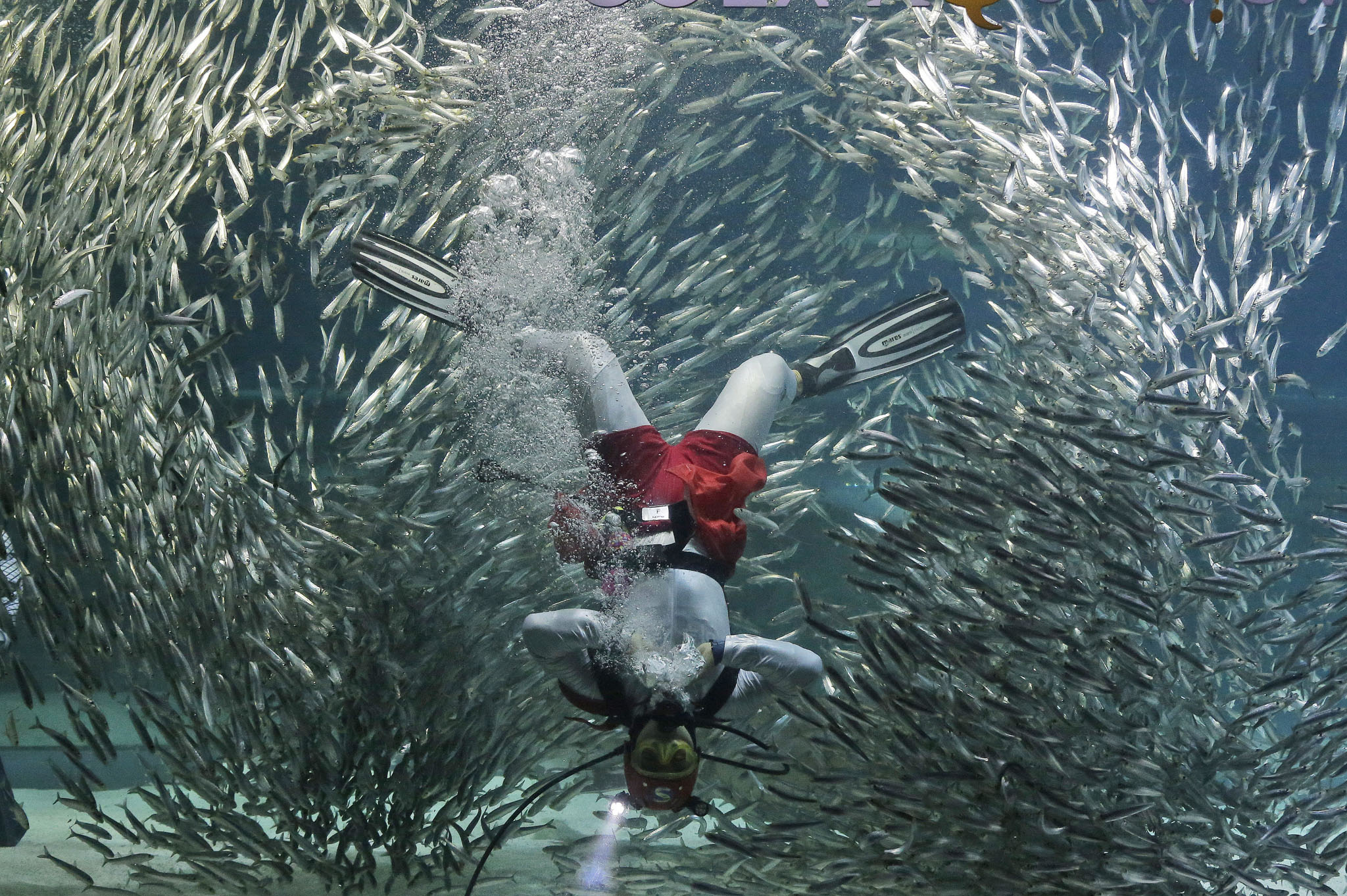 A diver performs with sardines as part of the summer events at the Coex Aquarium in Seoul, South Korea. The aquarium features 40,000 sea creatures from over 600 different species.