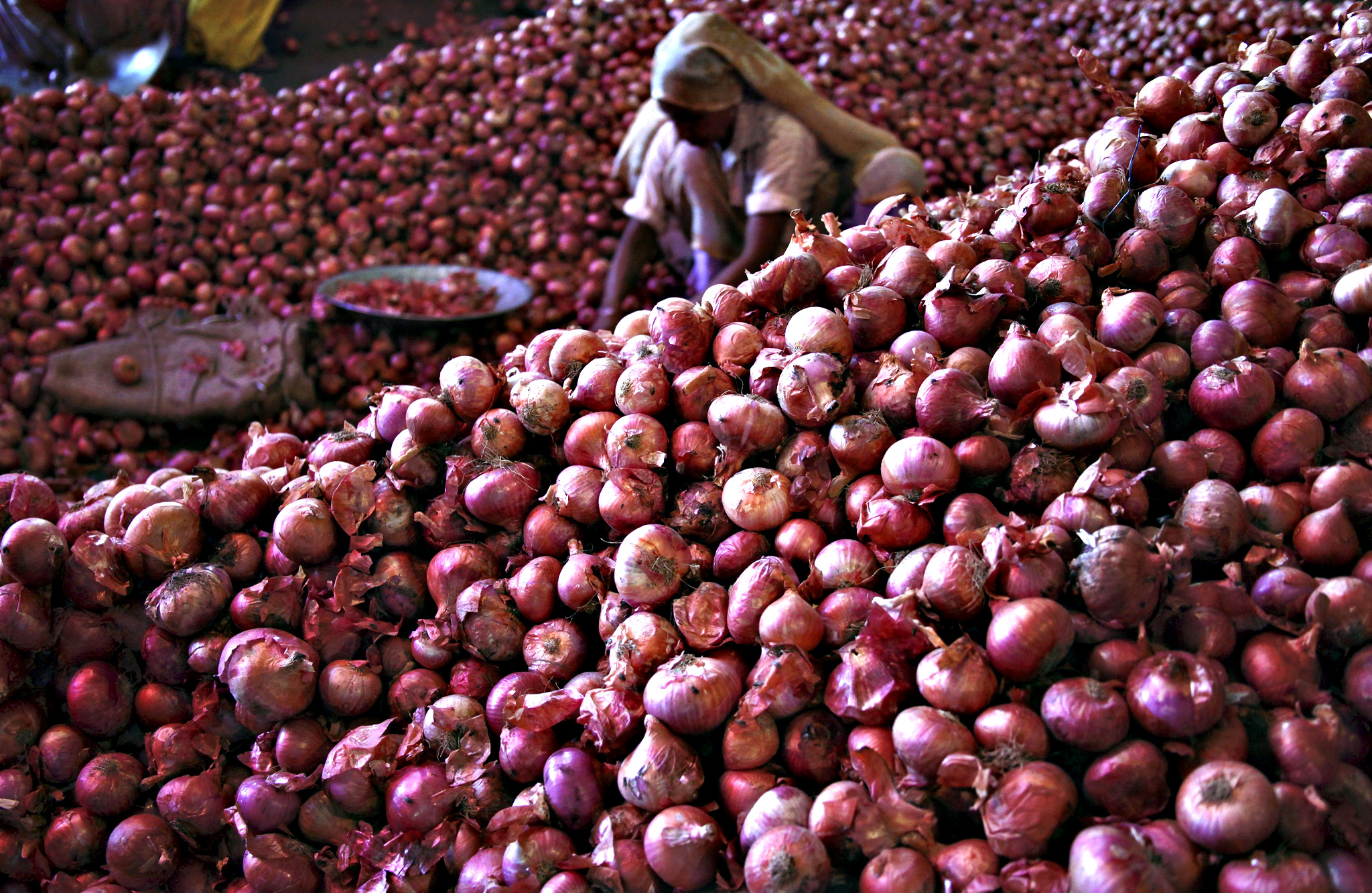A worker sorts onions at a wholesale vegetable market in Chandigarh, India, July 24, 2015. The price of Indian onions, a staple that has sparked protests in the past and toppled state governments, has jumped to its highest in nearly two years and could fuel food inflation as scant rain delays plantings