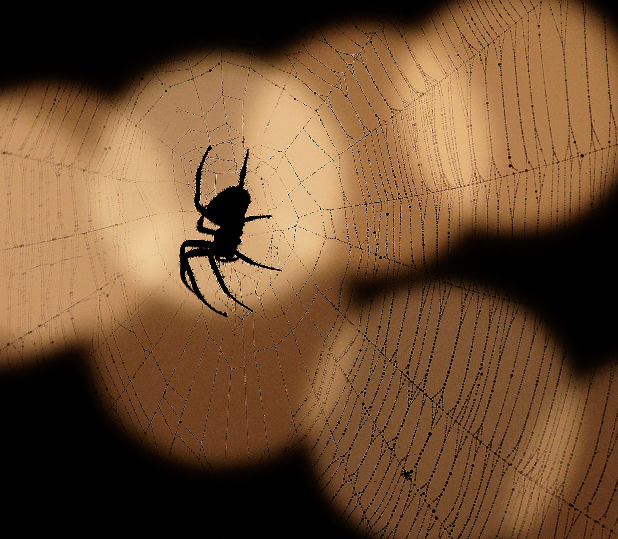 A spider is silhouetted against a string of lights in Overland Park, Kansas.