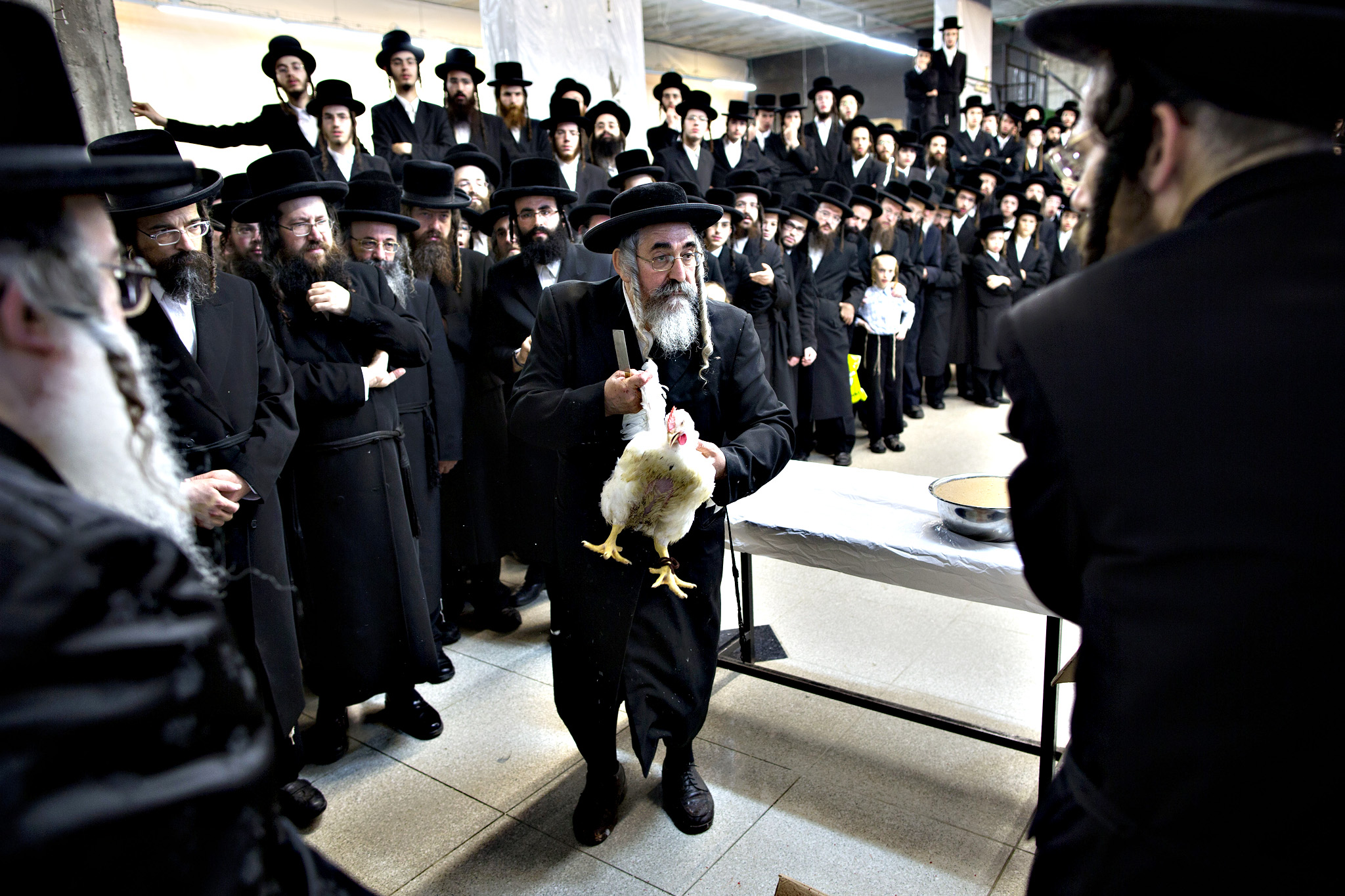 Ultra-Orthodox Jews of the Dorog Hassidic sect gather around a butcher just before he slaughter a chicken as part of the Kaparot ritual, in which it is believed that one transfers one's sins from the past year into the chicken, in the ultra-Orthodox city of Bnei Brak near Tel Aviv, Israel, Tuesday, Sept. 22, 2015. The ritual is performed before the Day of Atonement, Yom Kippur, the holiest day in the Jewish year which starts at sundown Tuesday