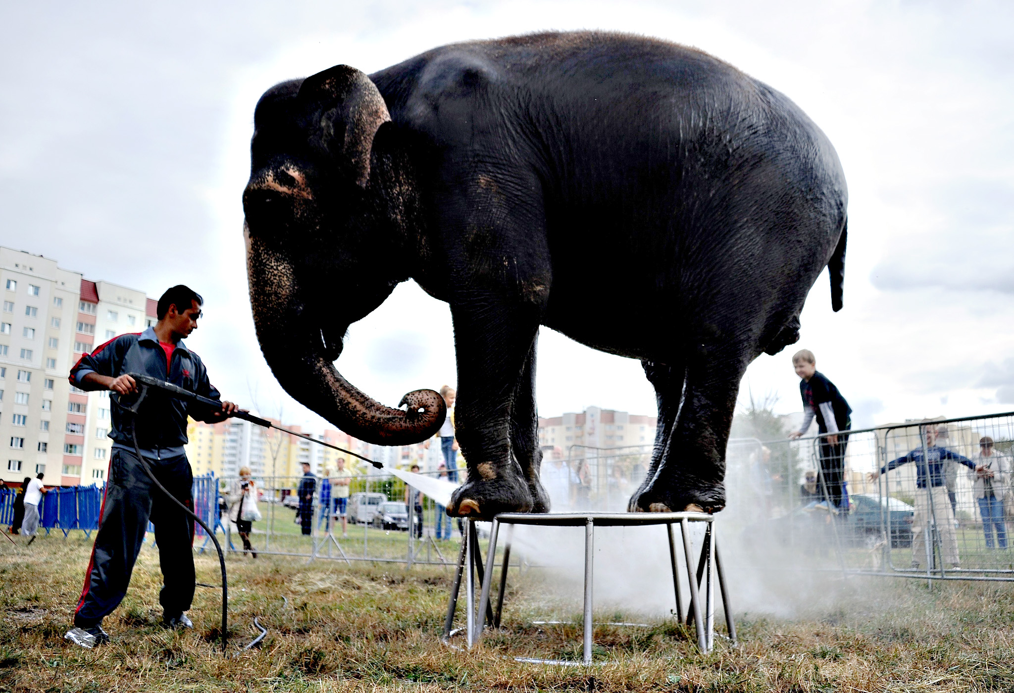 A caretaker washes down an elephant at the mobile Diva circus in the town of Molodechno, some 70 kilometers northwest of Minsk on September 3, 2015