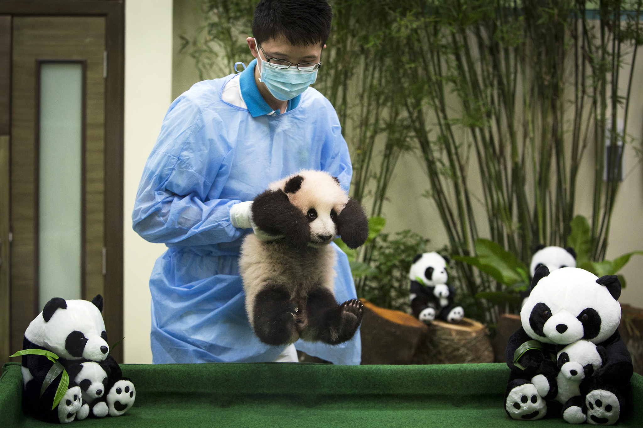 Malaysian zoo personnel carry a 4-month old female giant panda cub at the Giant Panda Conservation Center at the National Zoo in Kuala Lumpur, Malaysia, Tuesday, Nov. 17, 2015. (AP Photo/Joshua Paul)