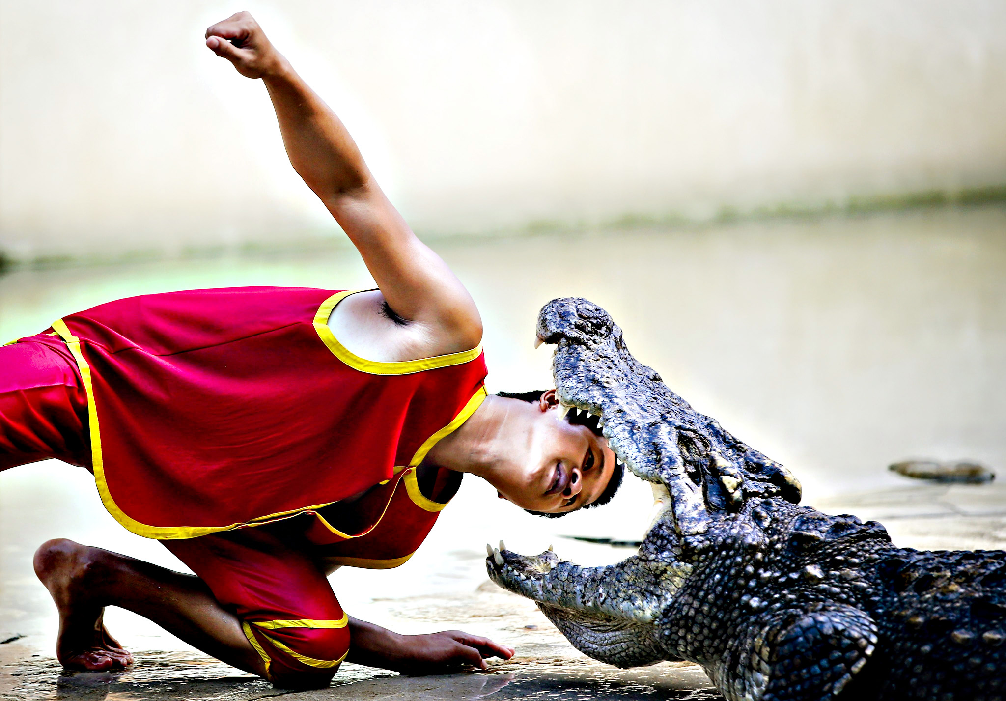 A handler puts his head between the gaping fangs of a crocodile during a show at the Samutprakarn Crocodile Farm and Zoo, Samutprakarn province, outside Bangkok, Thailand. The farm and zoo claims to be the world's largest crocodile farm with more than 80,000 freshwater and marine crocodiles, and offers shows such as crocodile wrestling to attract tourists