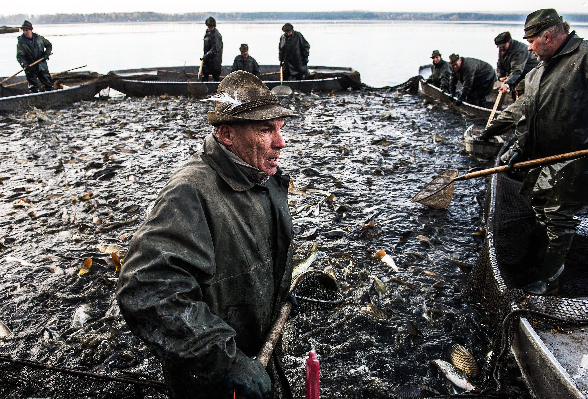 Czech fishermen sort fish during the traditional Carp haul at Lake of Dvoriste near Smrzov village, Czech Republic, on Monday. Carp, the traditional Czech Christmas Eve dinner, is harvested primarly from the region of southern Bohemian lakes