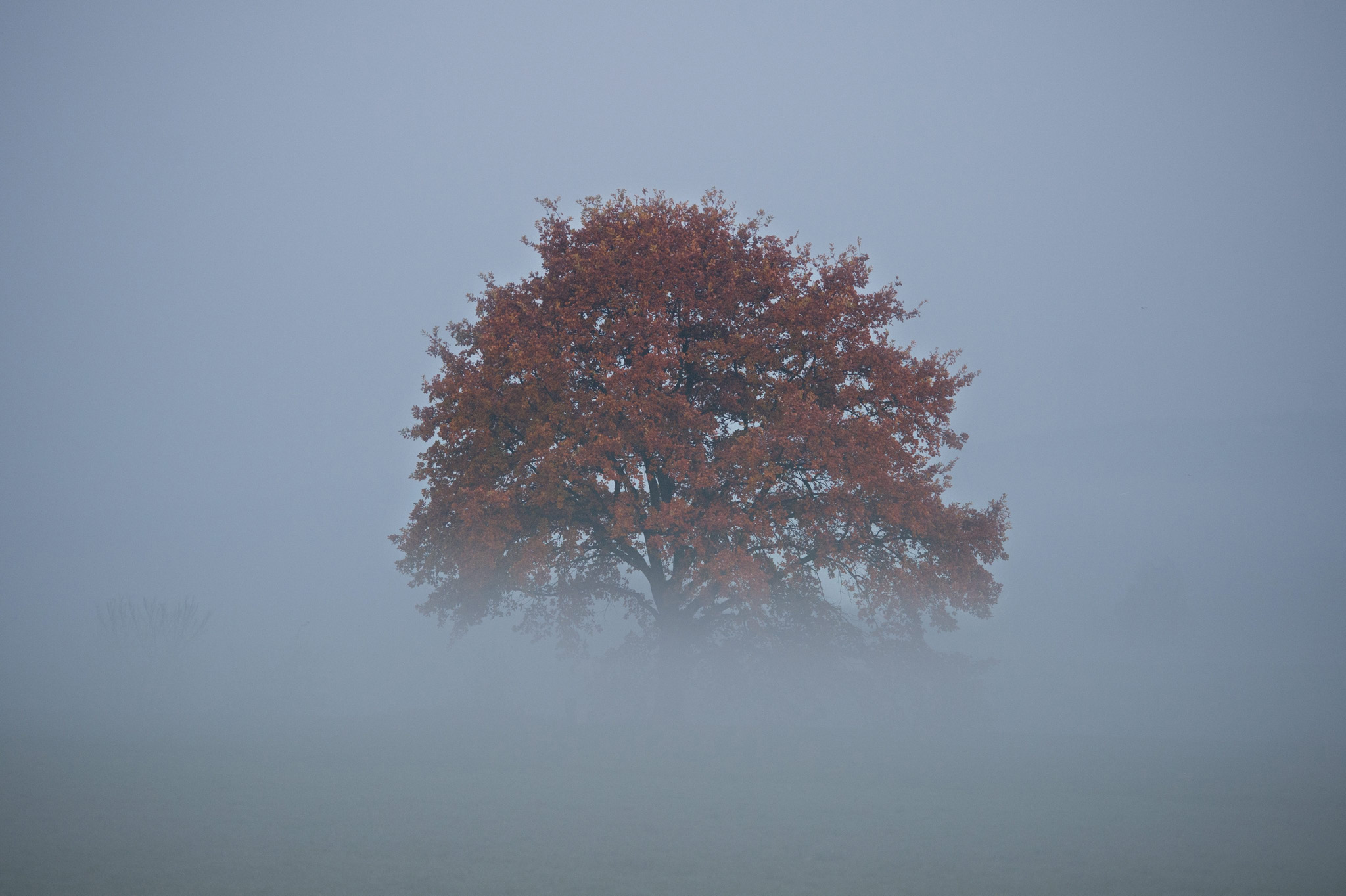 A tree stands in the morning fog in Dresden, Germany