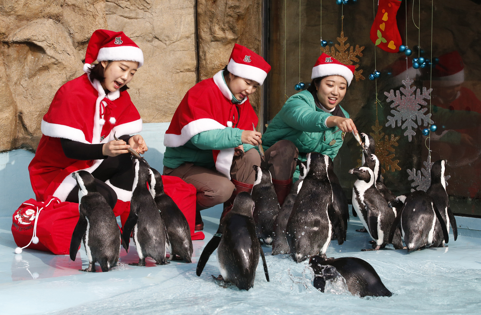Zookeepers dressed in Santa Claus costumes feed penguins during a Christmas event as part of a promotional event for the upcoming Christmas at the Everland amusement park in Yongin, South Korea, Wednesday, Dec. 23, 2015. (AP Photo/Lee Jin-Man)