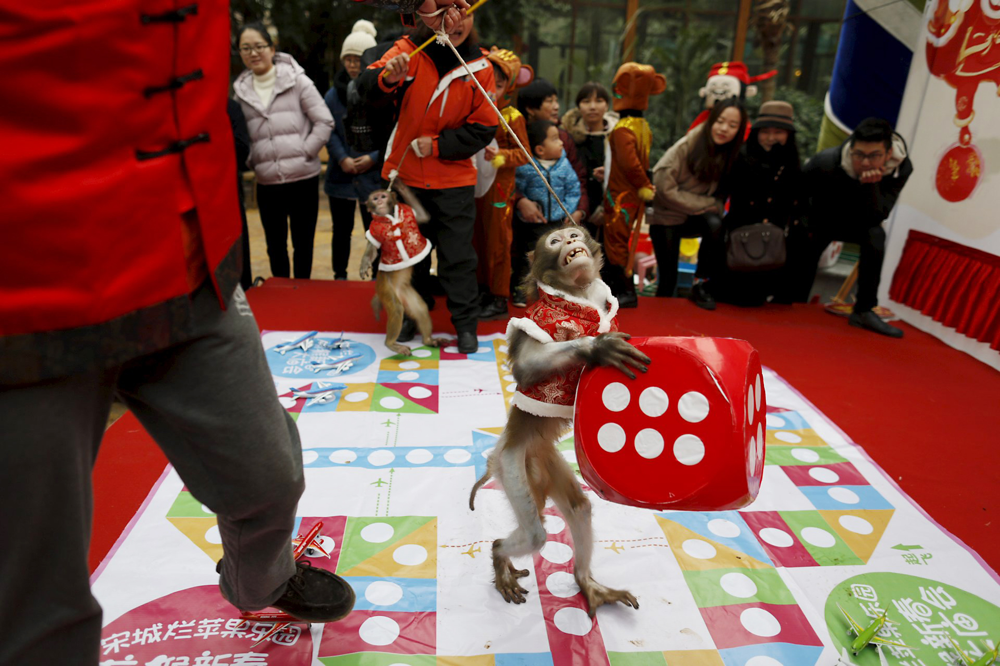 A monkey holds a dice during a performance ahead of the Chinese New Year of the Monkey which falls on February 8, in Hangzhou, Zhejiang province, January 28, 2016. REUTERS/China Daily      TPX IMAGES OF THE DAY     ATTENTION EDITORS - THIS PICTURE WAS PROVIDED BY A THIRD PARTY. THIS PICTURE IS DISTRIBUTED EXACTLY AS RECEIVED BY REUTERS, AS A SERVICE TO CLIENTS. CHINA OUT. NO COMMERCIAL OR EDITORIAL SALES IN CHINA.