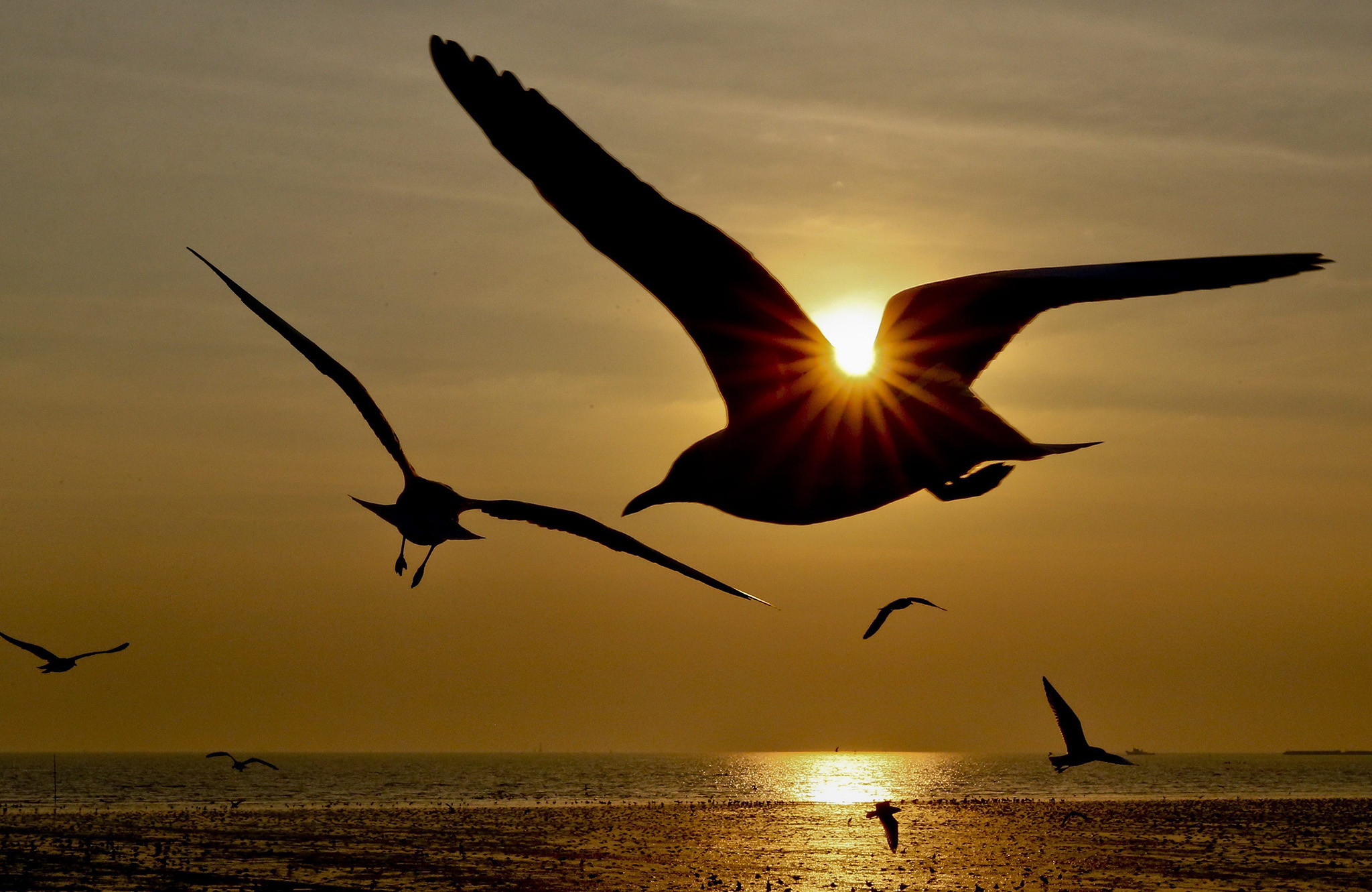 Seagulls fly during sunset at Bang Pu seaside resort in Samut Prakan province on the outskirts of Bangkok, Thailand