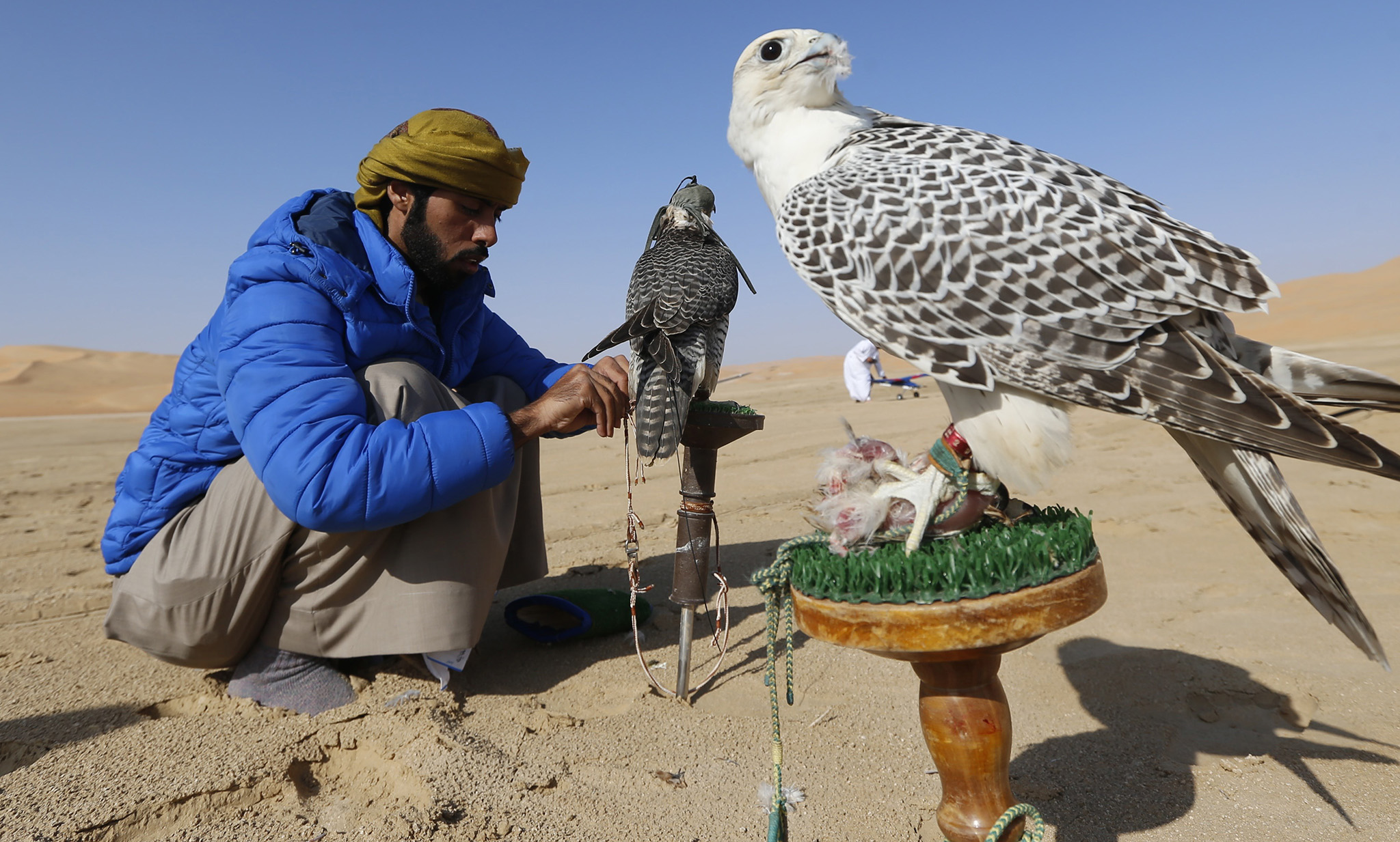 An Emirati falconer prepares to train his birds during the Liwa 2016 Moreeb Dune Festival in the Liwa desert, some 250 kilometres southwest of Abu Dhabi.