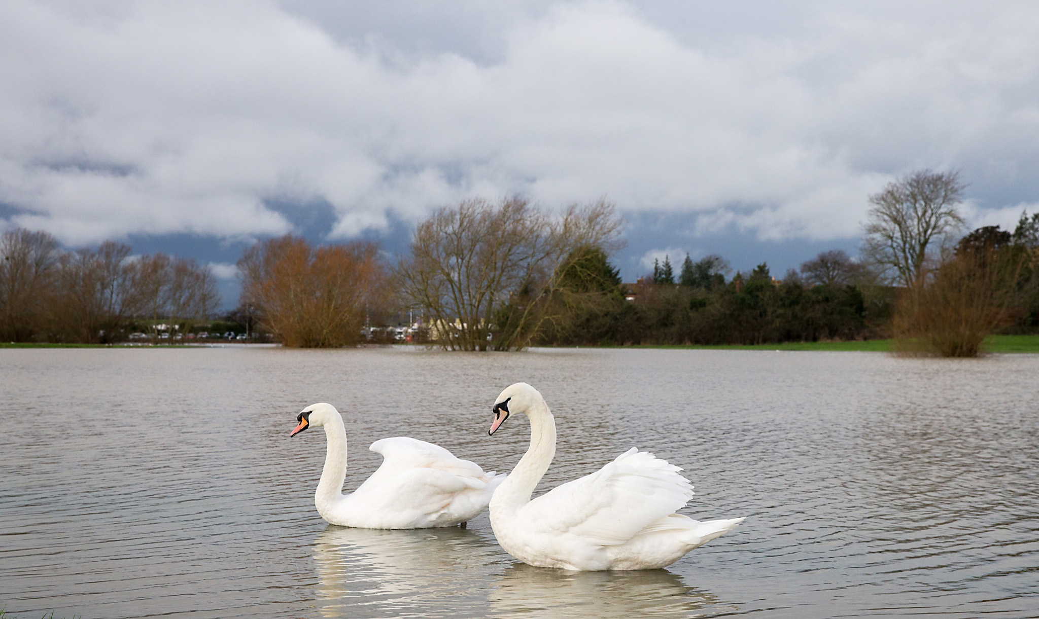Storm Gertrude Brings More Weather Alerts To The UK...TEWKESBURY, UNITED KINGDOM - JANUARY 04:  Swans swim on flood waters sitting around Tewkesbury Abbey after weeks of heavy rain on January 4, 2016 in Tewkesbury, England. Storm Gertrude is the latest winter storm to bring heavy rain fall and the threat of more flooding to the UK as well as causing widespread disruption to transport and infrastructure.  (Photo by Matt Cardy/Getty Images)