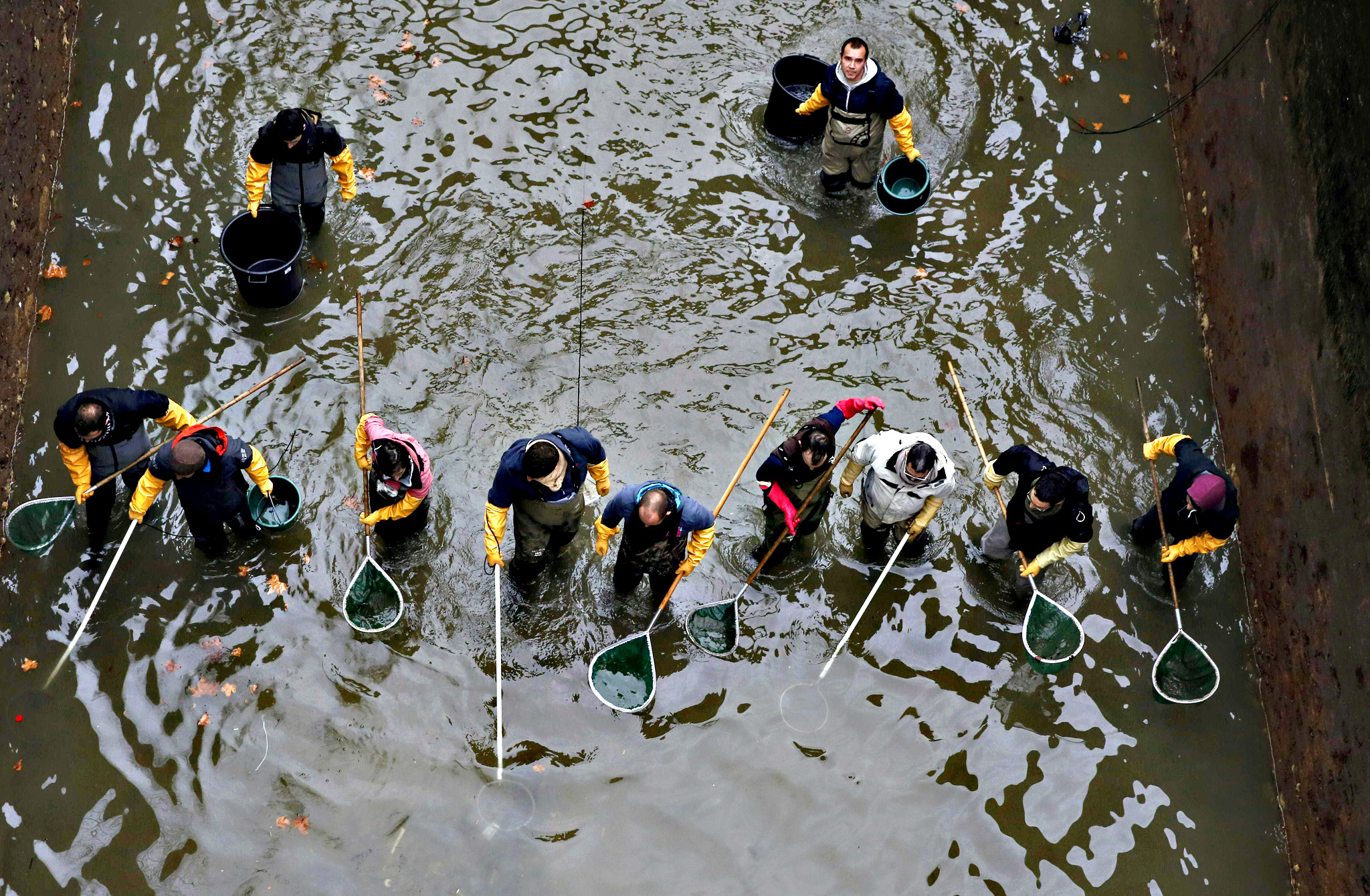 Workers remove fish from inside a lock on the canal Saint Martin in Paris on January 5, 2016 before a drainage and cleaning operation