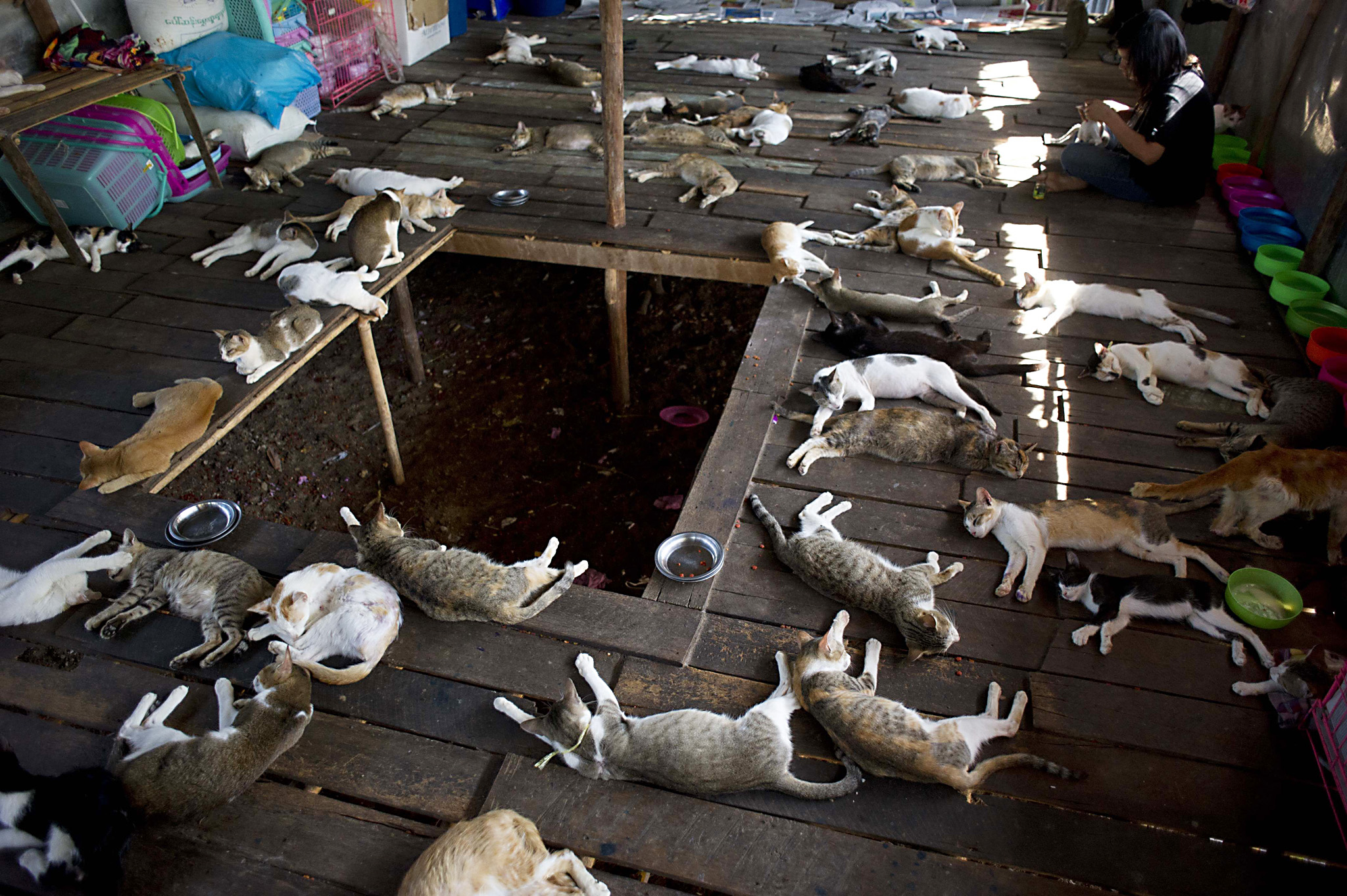 This photo taken on February 4, 2016 sho...This photo taken on February 4, 2016 shows a woman working next to cats at a shelter on the outskirts of Yangon. The shelter houses over 200 animals and are provided food and basic medical treatments which owners say were rescued from Yangon streets. AFP PHOTO / Ye Aung THUYe Aung Thu/AFP/Getty Images