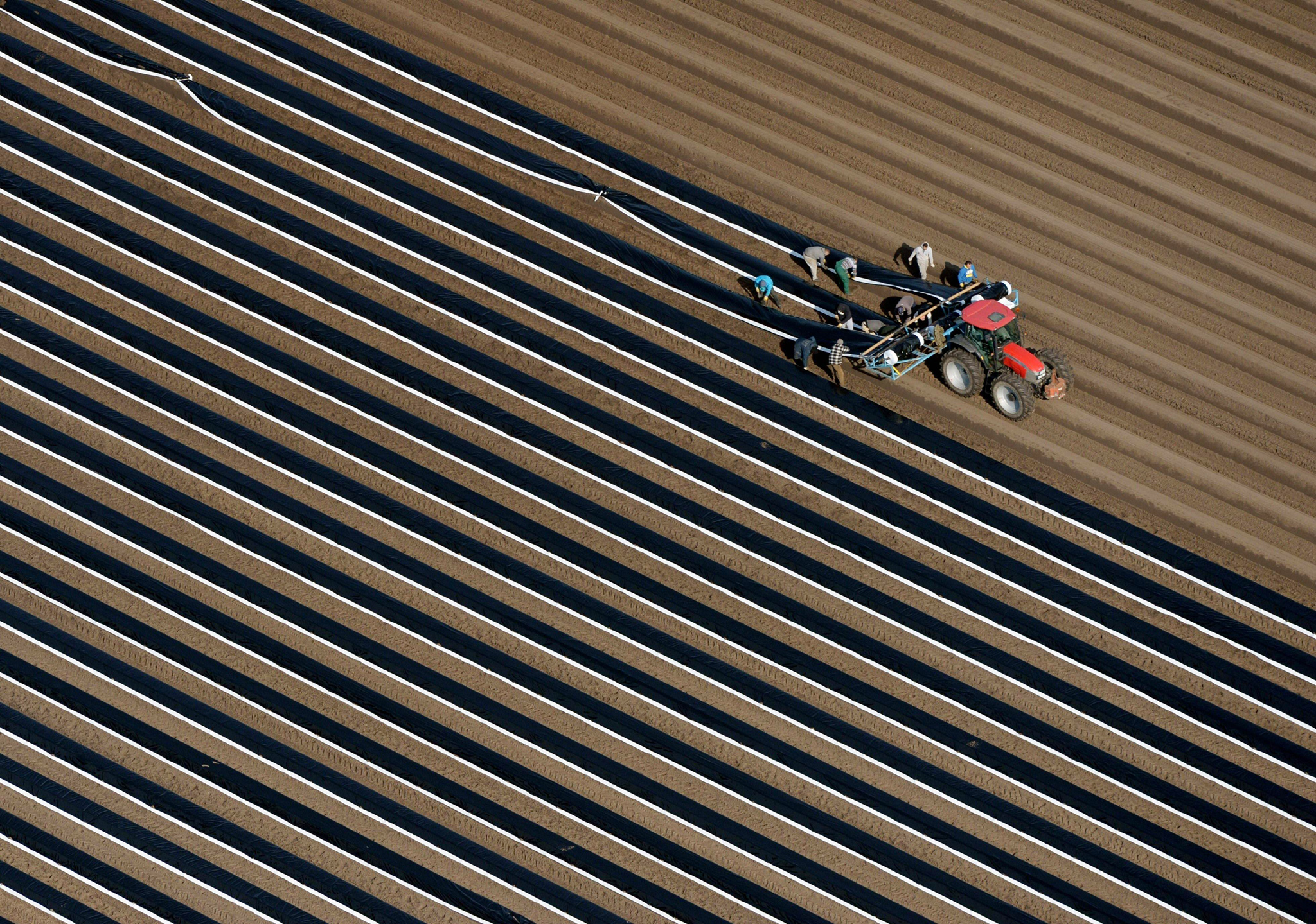 A tractor prepares the asparagus fields ...A tractor prepares the asparagus fields with plastic film against the frost near Beelitz in Brandenburg, eastern Germany, on March 4, 2016. / AFP / dpa / Ralf Hirschberger / Germany OUTRALF HIRSCHBERGER/AFP/Getty Images