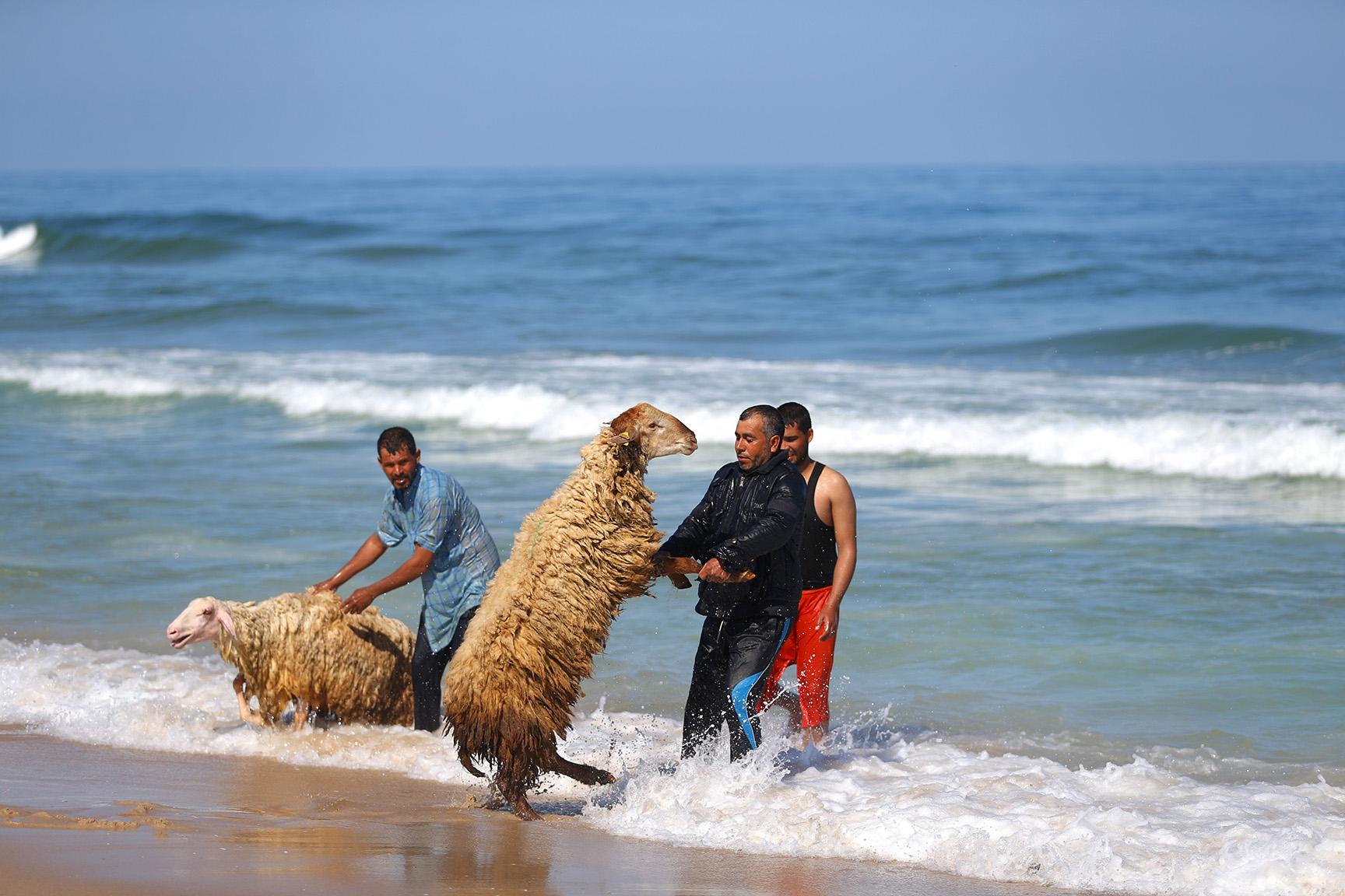 Palestinian bedouin shepherds
