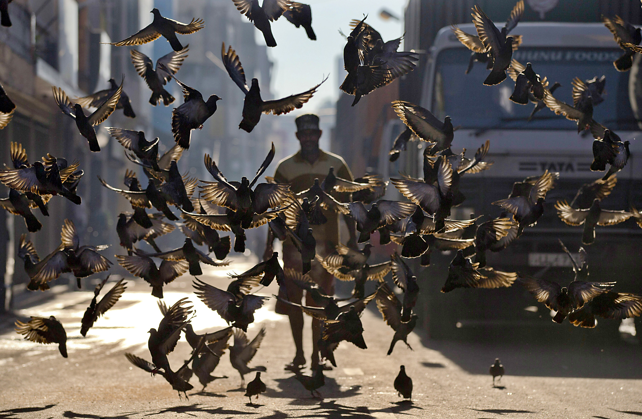 A flock of pigeons take off as a Sri Lankan man makes his way through a street in Colombo, Sri Lanka, Wednesday, April 20, 2016. Some believe feeding pigeons earn them good deeds. (AP Photo/Eranga Jayawardena)