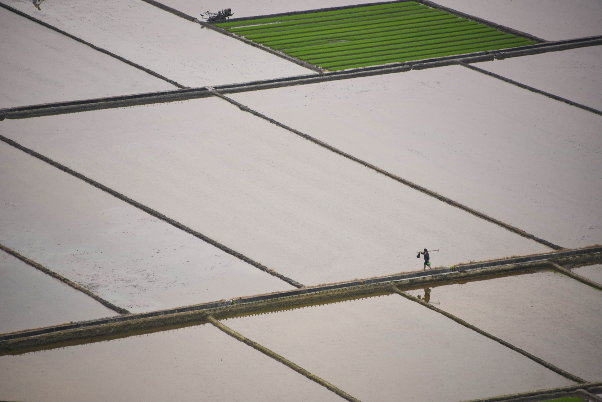 A farmer walks through rice fields in Qiantang village of Suichuan county...A farmer walks through rice fields in Qiantang village of Suichuan county, Jiangxi Province, China, April 6, 2016. Picture taken April 6, 2016.  REUTERS/China Daily ATTENTION EDITORS - THIS PICTURE WAS PROVIDED BY A THIRD PARTY. THIS PICTURE IS DISTRIBUTED EXACTLY AS RECEIVED BY REUTERS, AS A SERVICE TO CLIENTS. CHINA OUT. NO COMMERCIAL OR EDITORIAL SALES IN CHINA.
