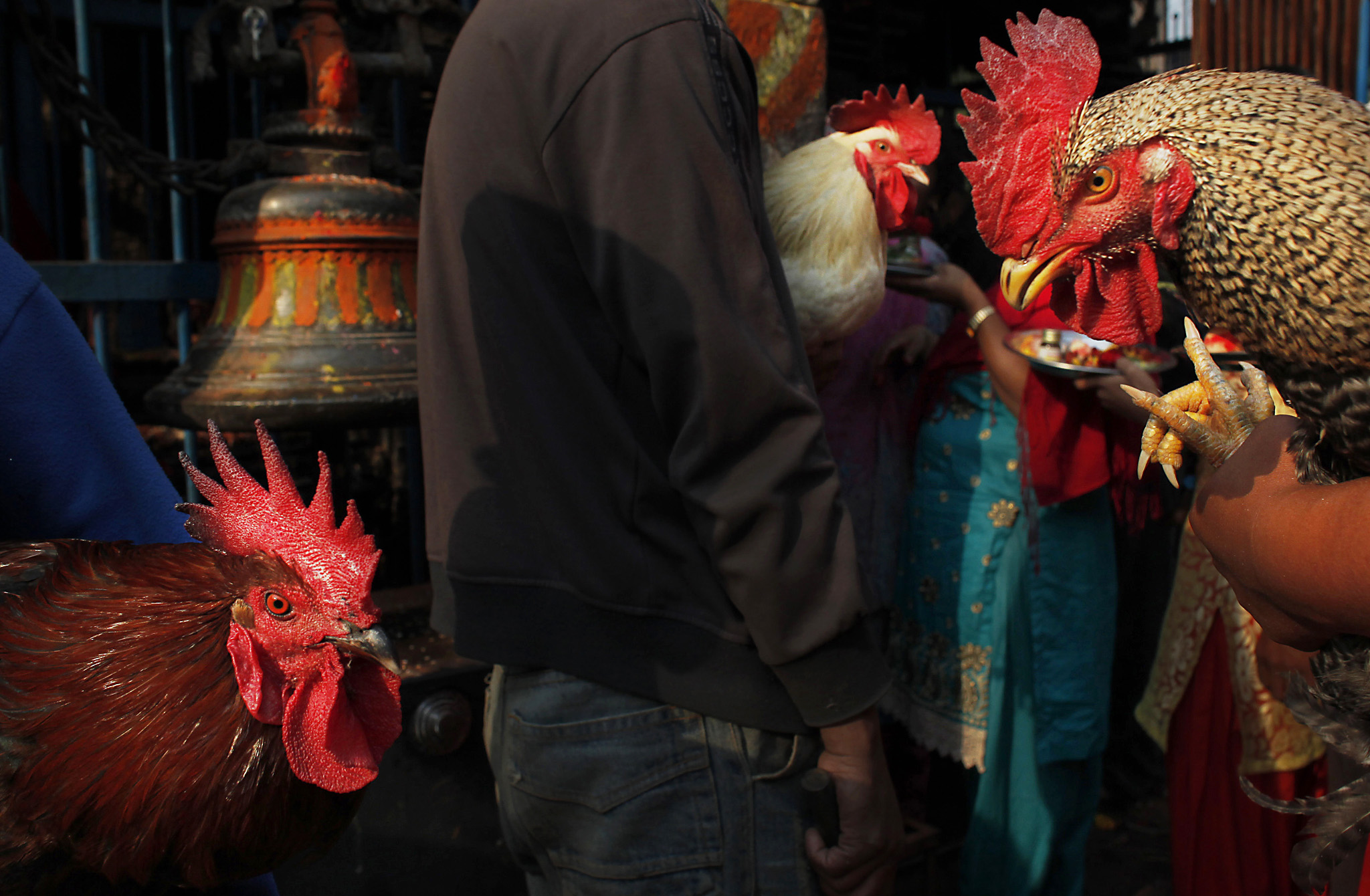 Nepalese devotees hold sacrificial chickens as they wait in a queue to enter the 'Balkumari' temple during Sindoor Jatra festival in Bhaktapur, Nepal, Thursday, April 14, 2016. Devotees mark the festival by playing traditional drums, singing, dancing and carrying chariot of various deities around town while throwing vermillion powder to welcome the advent of spring and the New Year. (AP Photo/Niranjan Shrestha)