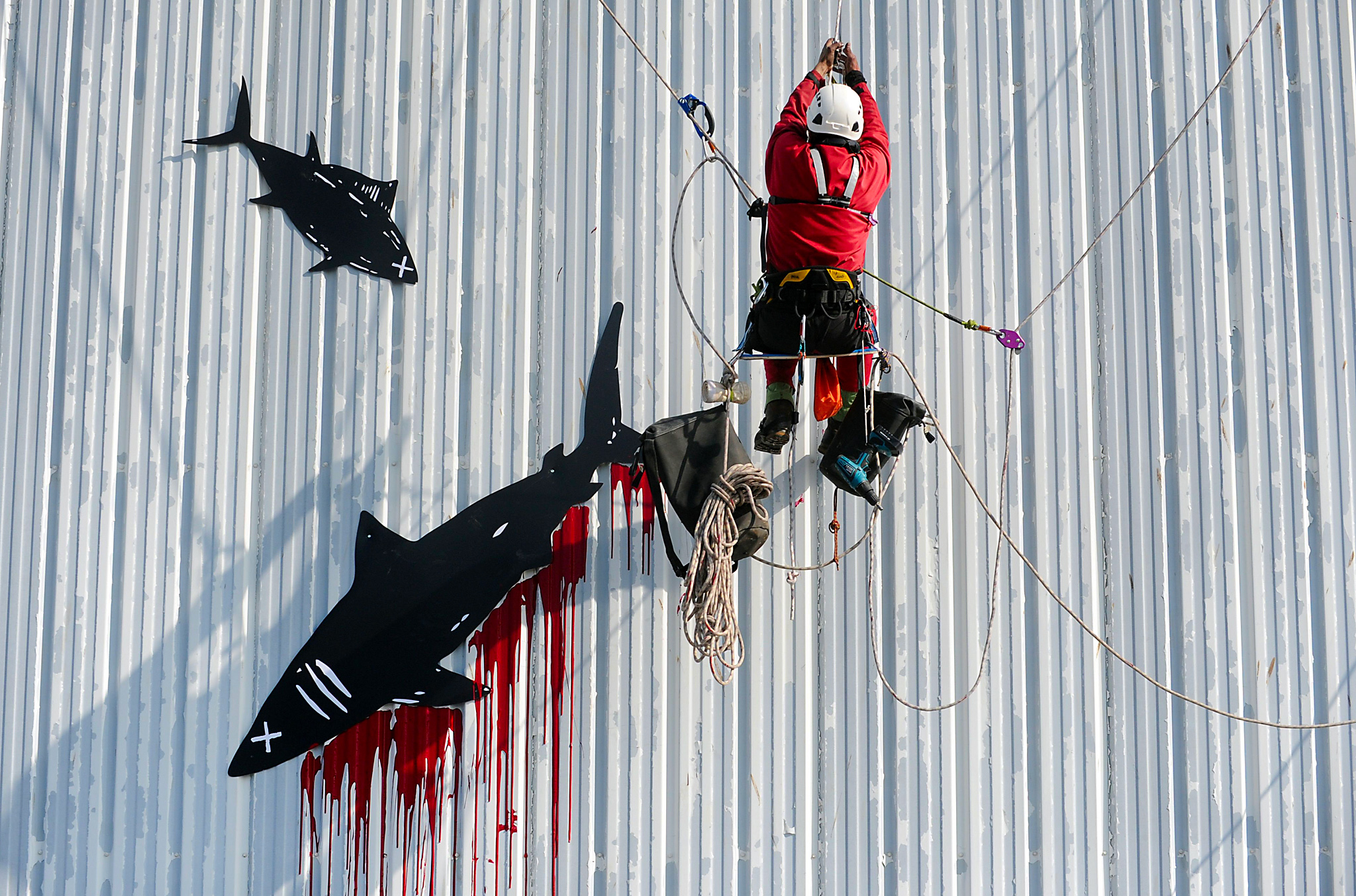 An activist of the non-governmental environmental organization Greenpeace repaints with red paint a tuna logo on the building of the major French seafood wholesaler Petit Navire's canning factory to protest against fishing methods in Douarnenez, western France on May 23, 2016.  / AFP PHOTO / FRED TANNEAUFRED TANNEAU/AFP/Getty Images
