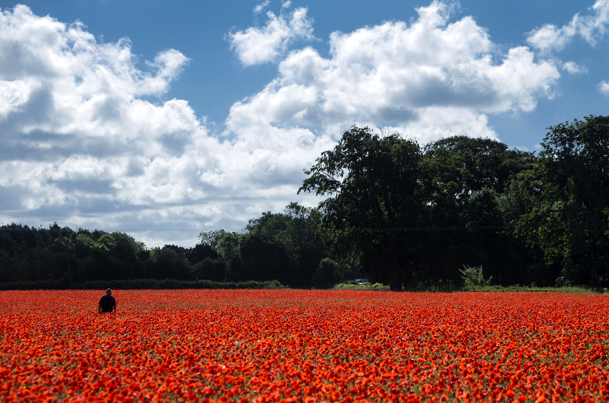 A poppy field near York as the UK and France prepare to commemorate the Battle of the Somme. PRESS ASSOCIATION Photo. Picture date: Thursday June 30, 2016.  The Queen and senior royals will lead the nation in remembrance to mark the centenary of the Battle of the Somme. Events across the UK and in France will commemorate the start of the battle on July 1 1916, a day that became the bloodiest in British military history with almost 20,000 dead. See PA story HERITAGE Somme. Photo credit should read: Danny Lawson/PA Wire