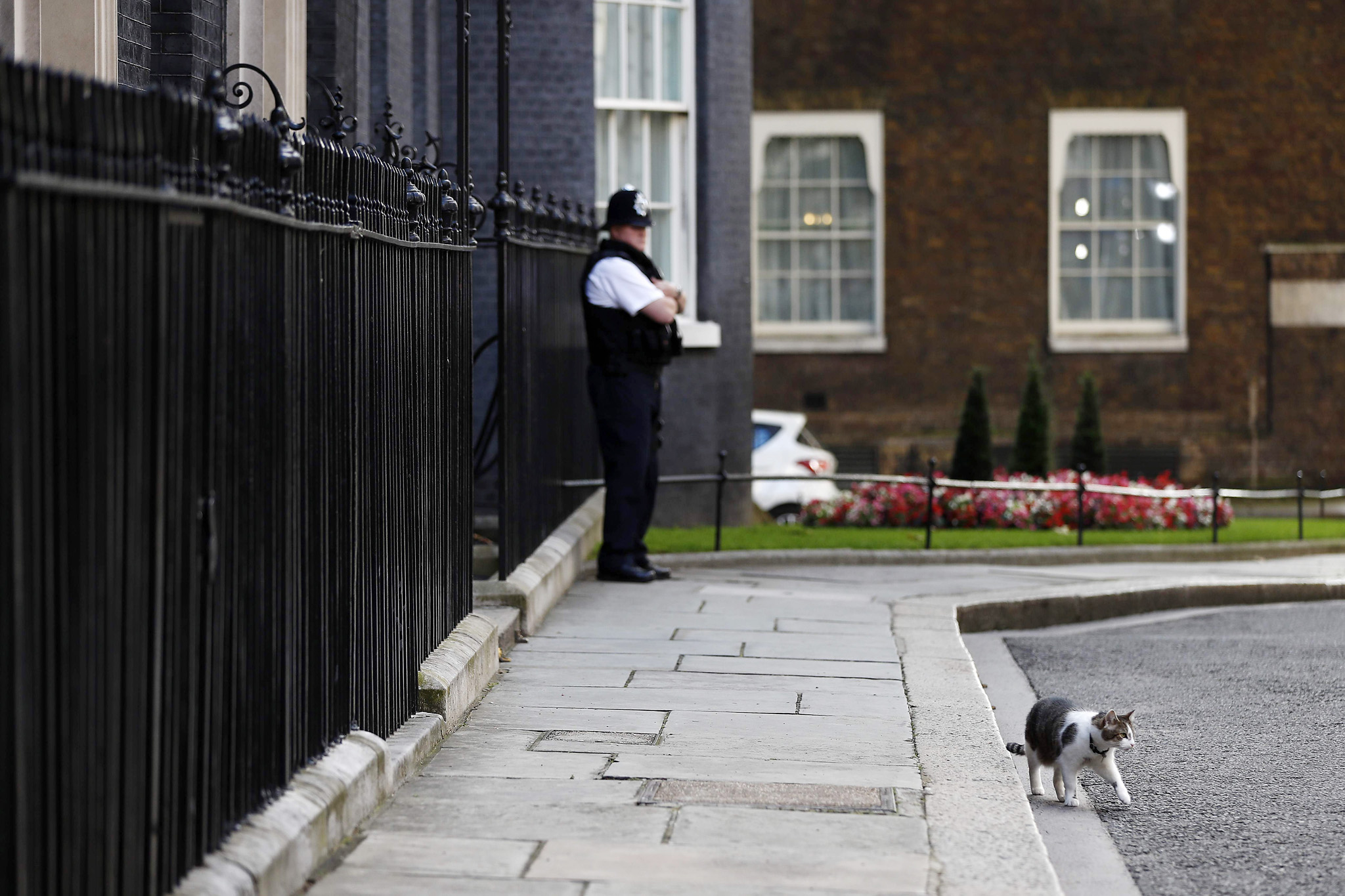 Larry the Downing Street cat walks outside No 10 DOwning Street in central London