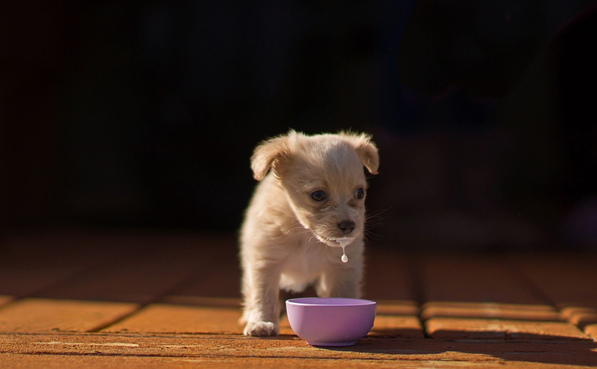 Undated handout photo issued by The Kennel Club taken by Linda Storm from the USA, of a rescue puppy enjoying a bowl of milk, which has won 1st place in the Puppy category in the Kennel Club Dog Photographer of the Year competition.