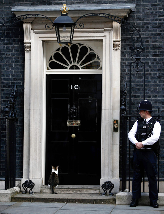 Larry, the 10 Downing Street cat, sits on the step outside the door of number 10 Downing Street in London on July 13, 2016, as Prime Minister David Cameron prepares to address his final Prime Minister's Questions at the House of Commons. British Prime Minister David Cameron is leaving his official
