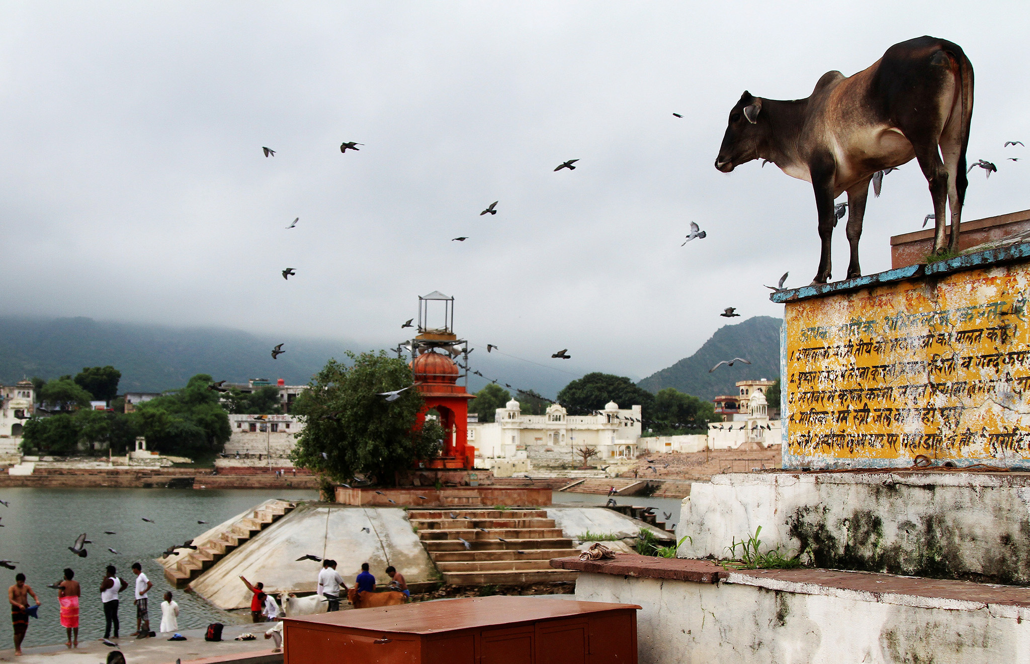 A cow stands outside a temple at a lake in Pushkar, in the desert state of Rajasthan, India