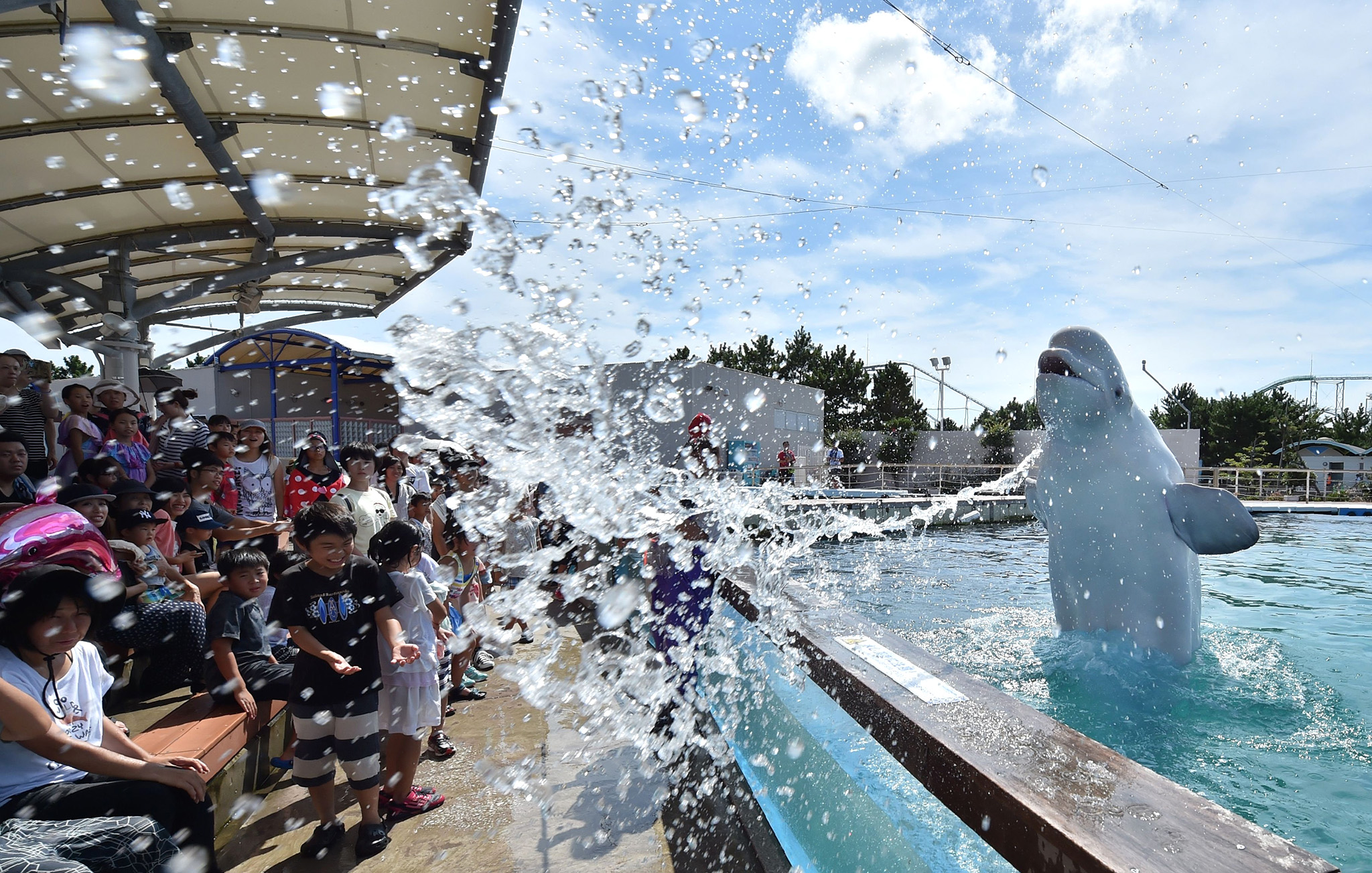 A beluga whale sprays water at visitors during a summer attraction at a sea park in Yokohama, suburban Tokyo on August 5, 2016.