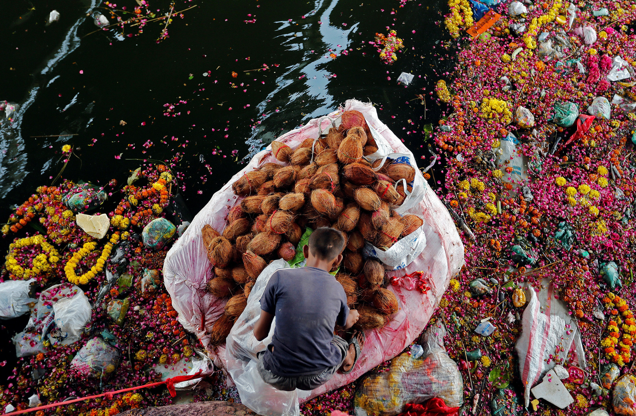 A man collects coconuts thrown as offerings by worshippers into the Sabarmati river, a day after the immersion of idols of the Hindu god Ganesh, the deity of prosperity, in Ahmedabad, India
