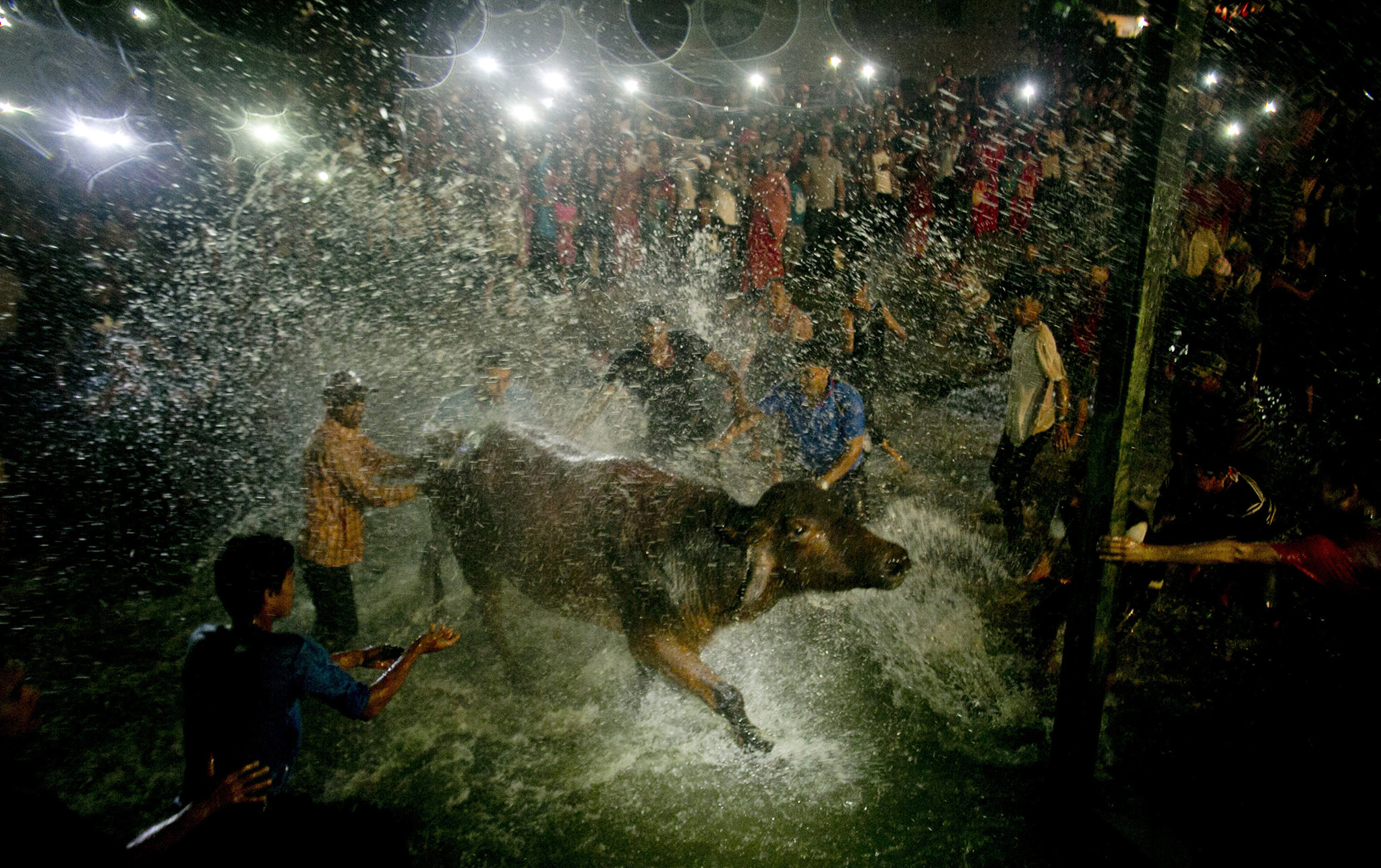 Hindu devotees splash a water buffalo with water from Hanumante River as part of rituals before it is sacrificed on the ninth day of Dashain Hindu Festival in Bhaktapur  Nepal, Monday, Oct. 10, 2016. The festival commemorates the slaying of a demon king by Hindu goddess Durga, marking the victory of good over evil. Animals are sacrificed at Hindu temples during this festival. (AP Photo/Niranjan Shrestha)