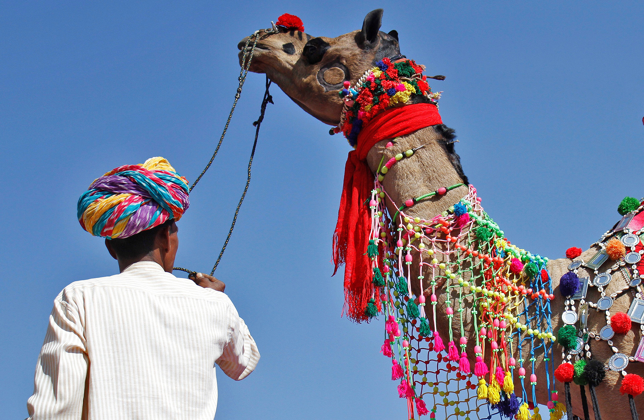 A trader displays his camel during a camel decoration competition at Pushkar Fair, where animals mainly camels are brought to be sold and traded in the desert Indian state of Rajasthan, India, November 9, 2016. REUTERS/Himanshu Sharma     TPX IMAGES OF THE DAY