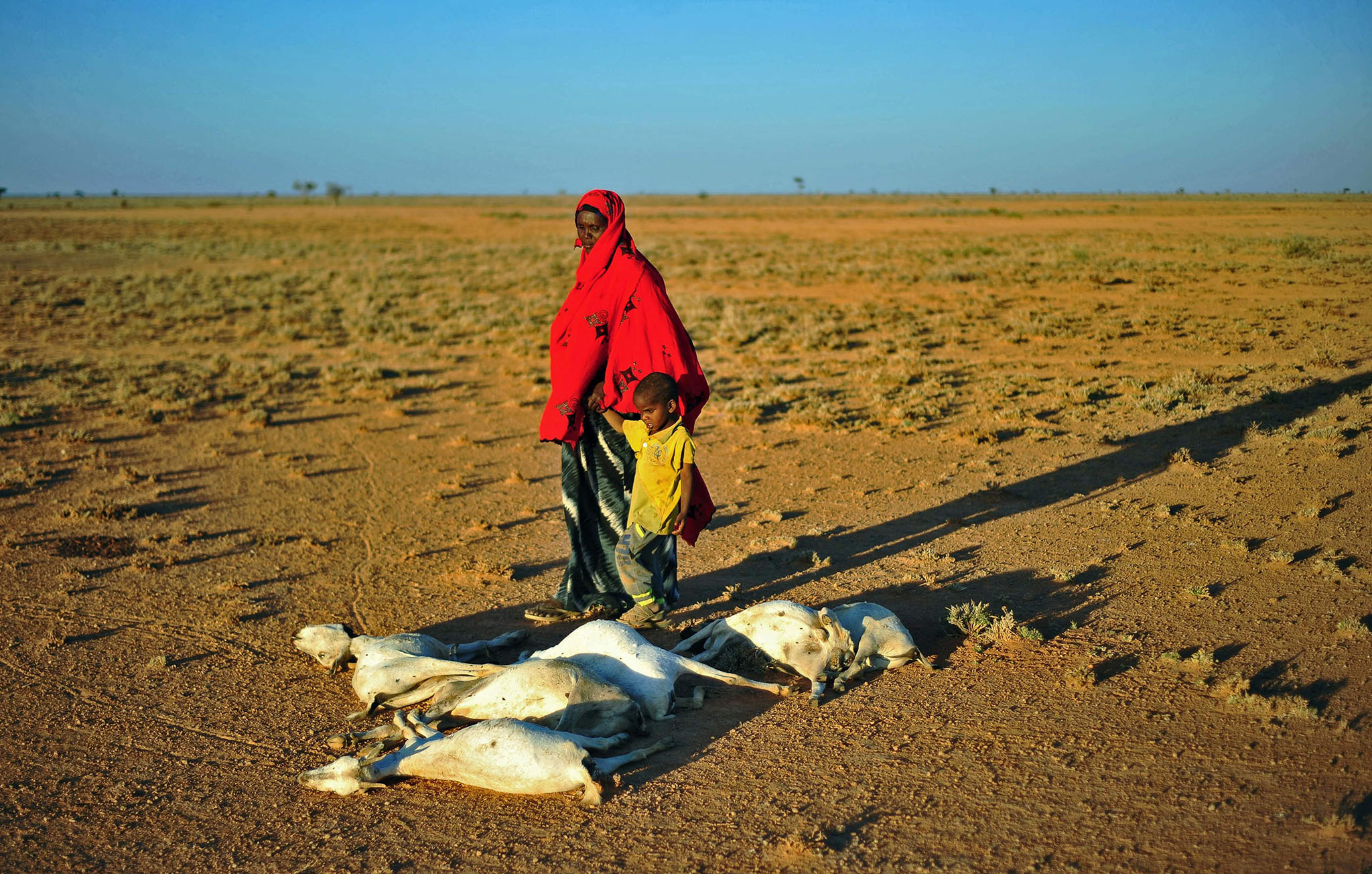 A woman and a boy walk past a flock of dead goats in a dry land close to Dhahar in Puntland, northeastern Somalia, on December 15, 2016.  Drought in the region has severely affected livestock for local herdsmen.  / AFP PHOTO / MOHAMED ABDIWAHABMOHAMED ABDIWAHAB/AFP/Getty Images