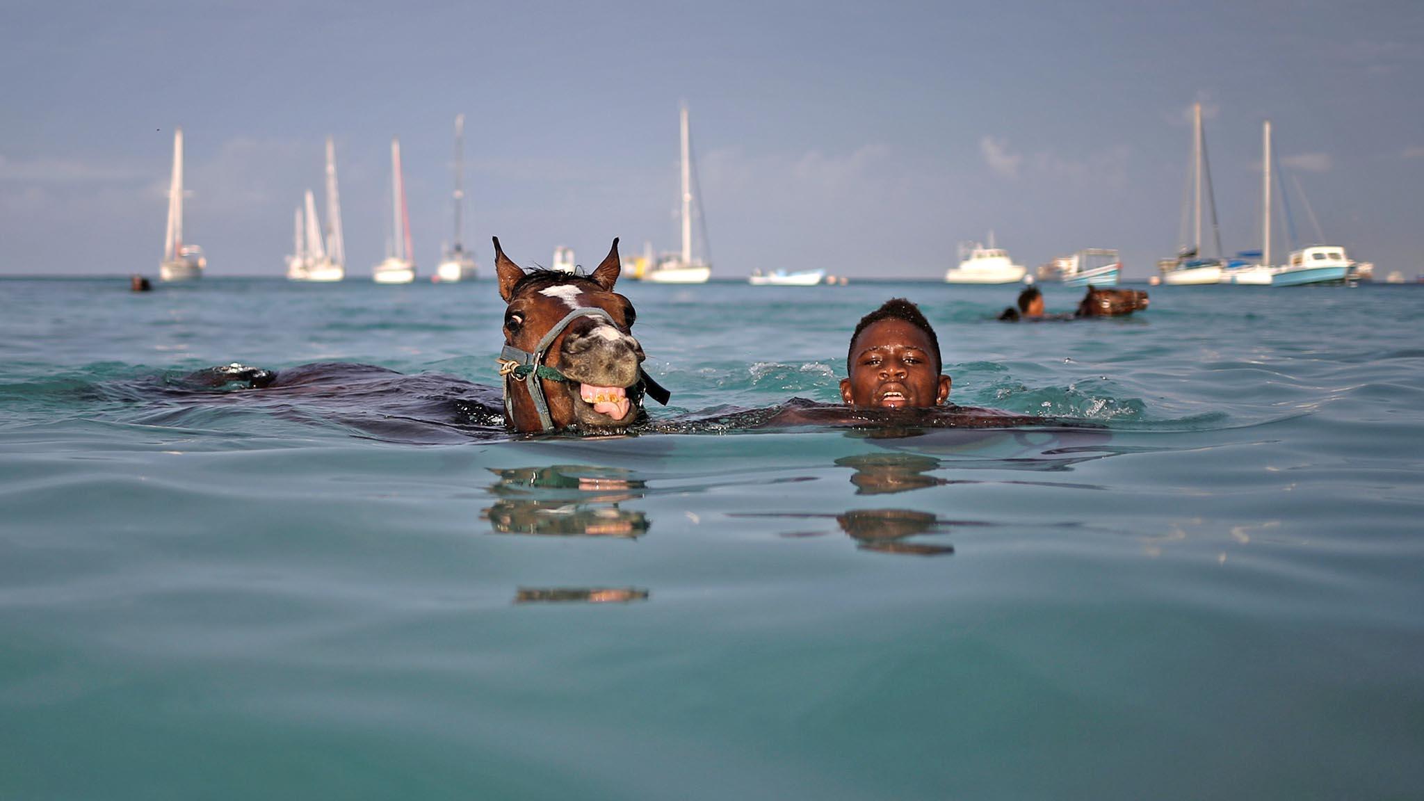 A handler swims with a horse from the Garrison Savannah in the Caribbean Sea near Bridgetown, Barbados