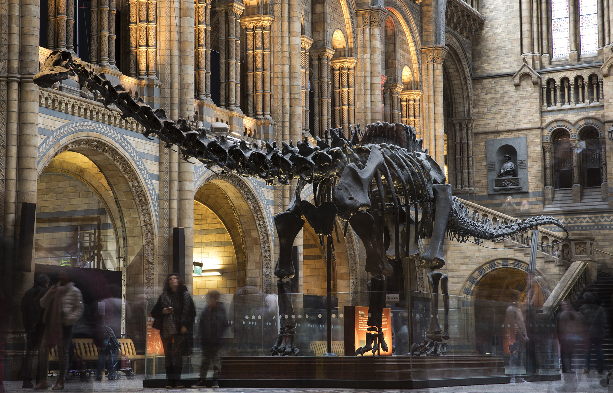 LONDON, ENGLAND - JANUARY 04:  Members of the public walk walk around 'Dippy' the Diplodocus at Natural History Museum on January 4, 2017 in London, England. The 70ft long (21.3m) plaster-cast sauropod replica, which is made up of 292 bones, is set to leave the Natural History Museum in London, where it has been for 109 years, before going on a national tour. Dippy will be replaced by an 83 foot long real skeleton of a Blue Whale, which will be hung from the ceiling.  (Photo by Dan Kitwood/Getty Images